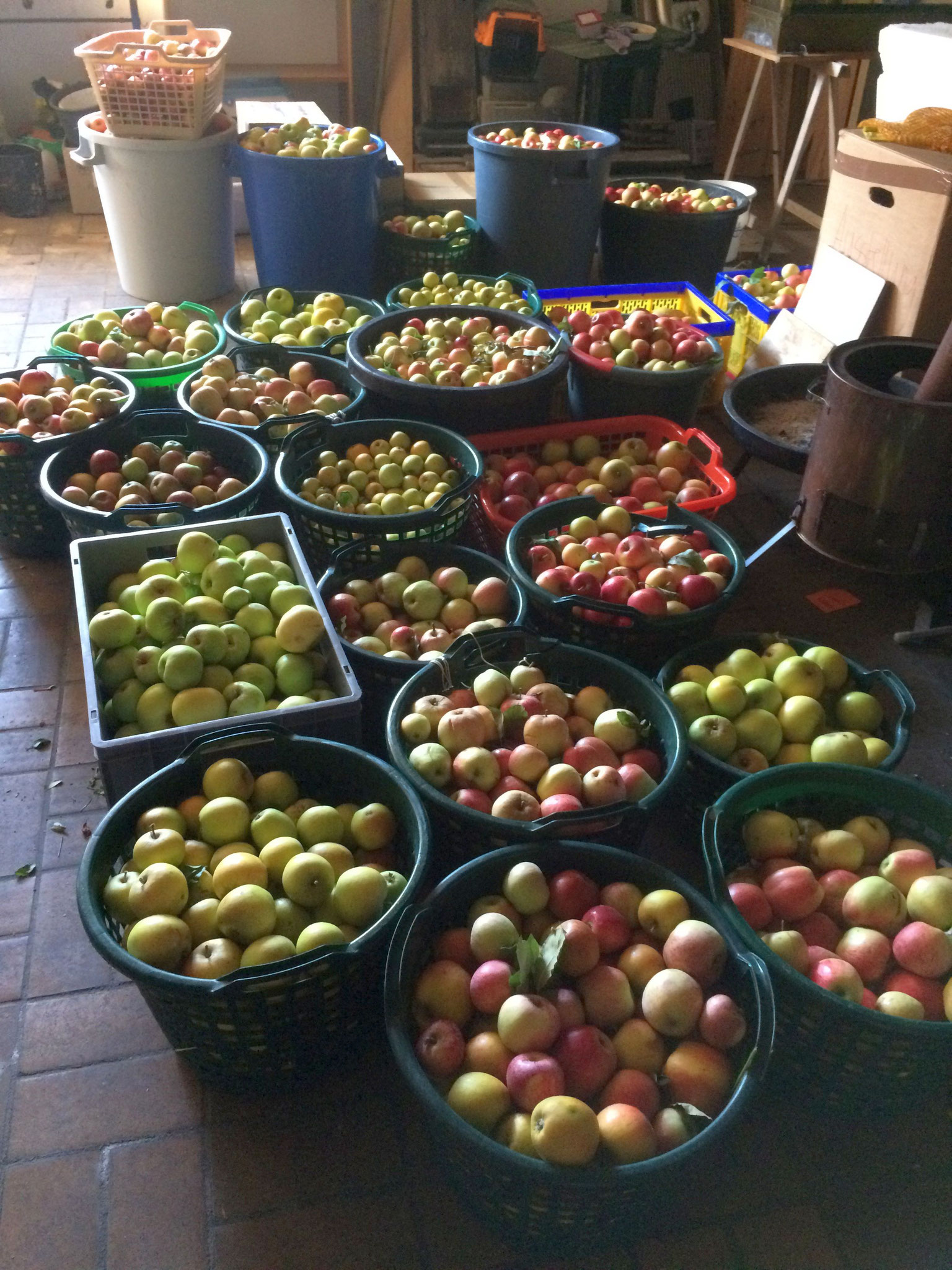Apfelernte (NABU / J. Steigleder)