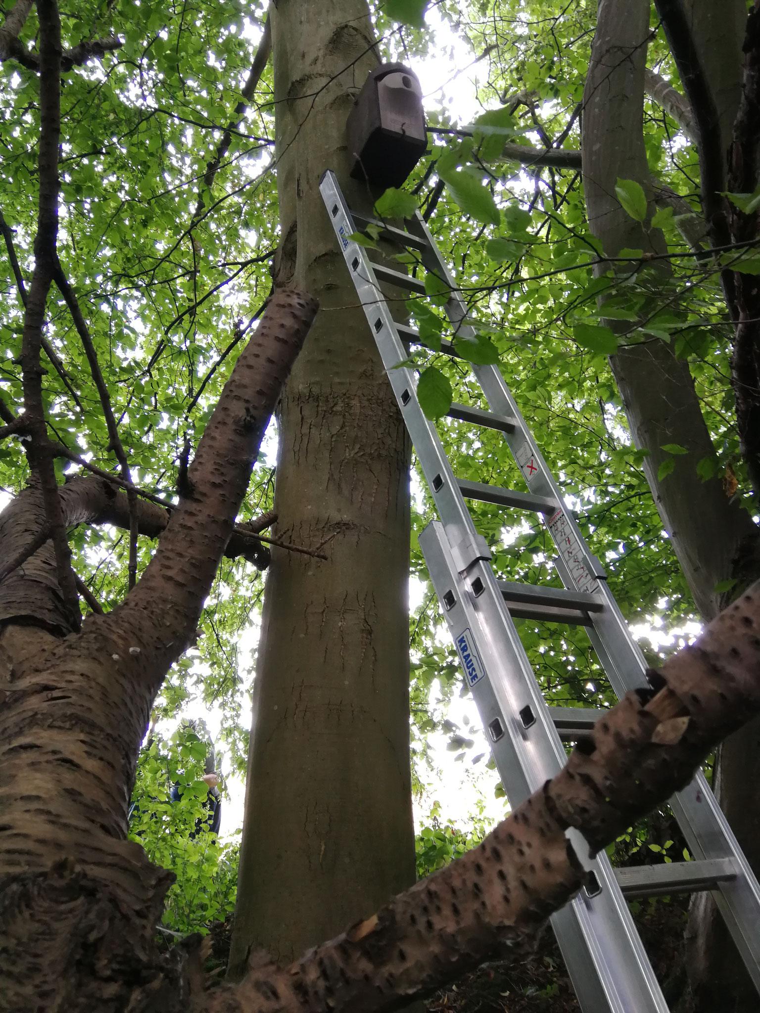 Die Kästen müssen in mehreren Metern Höhe aufgehängt werden.