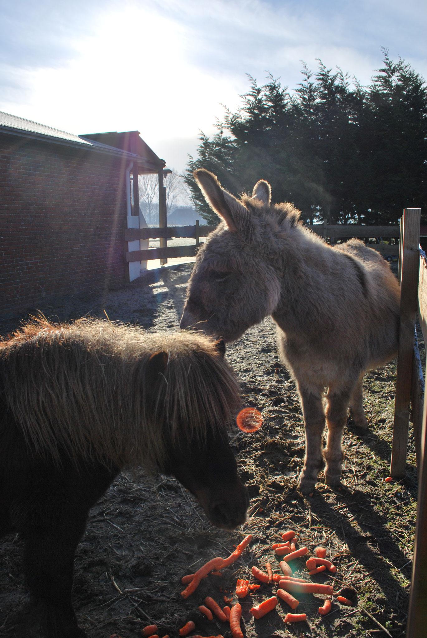 Onze Shetlander & Ezel Nono