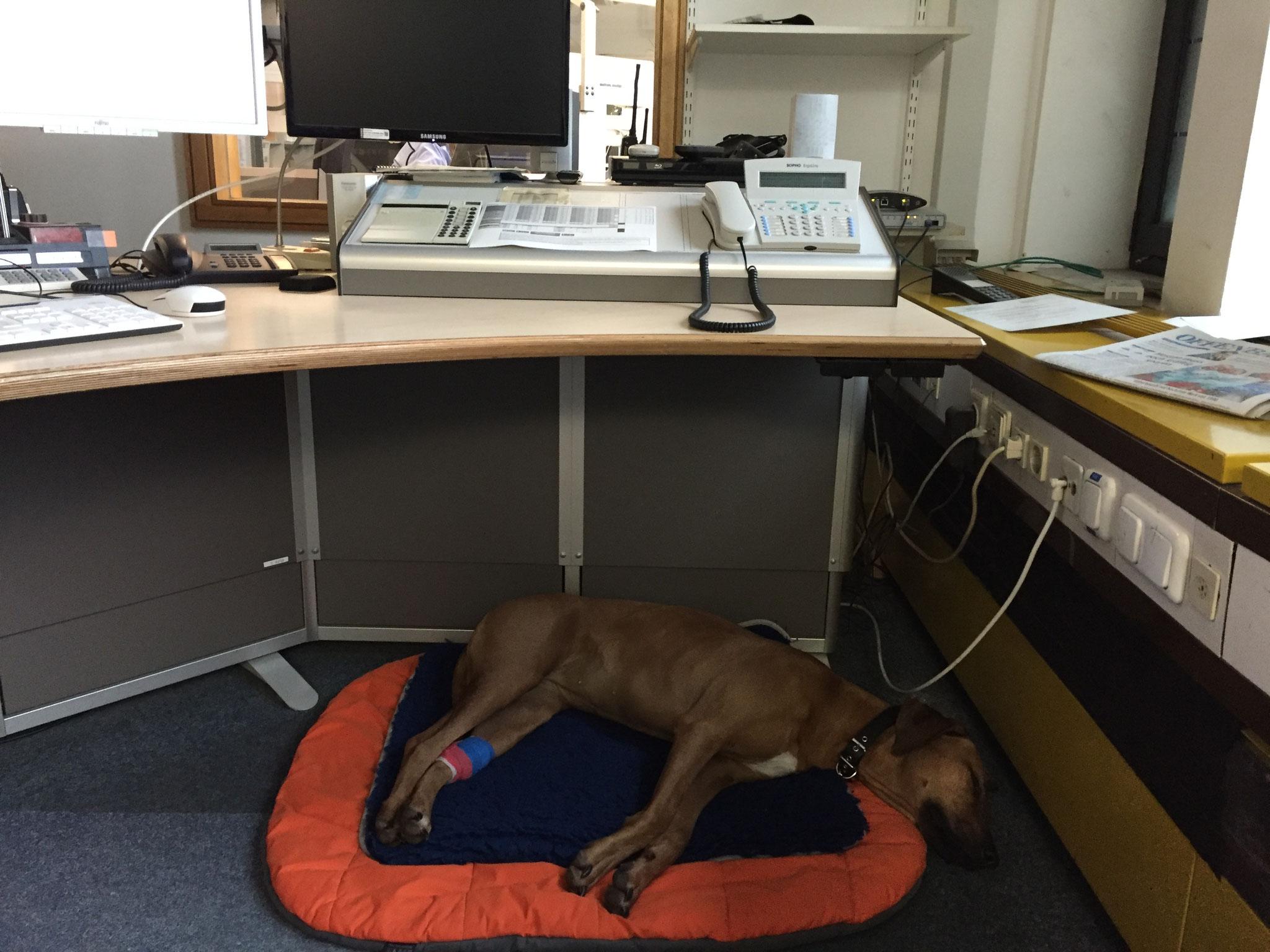 Sie bekommt insgesamt 52 Infusionen. Wie hier, unter Aufsicht im Büro.