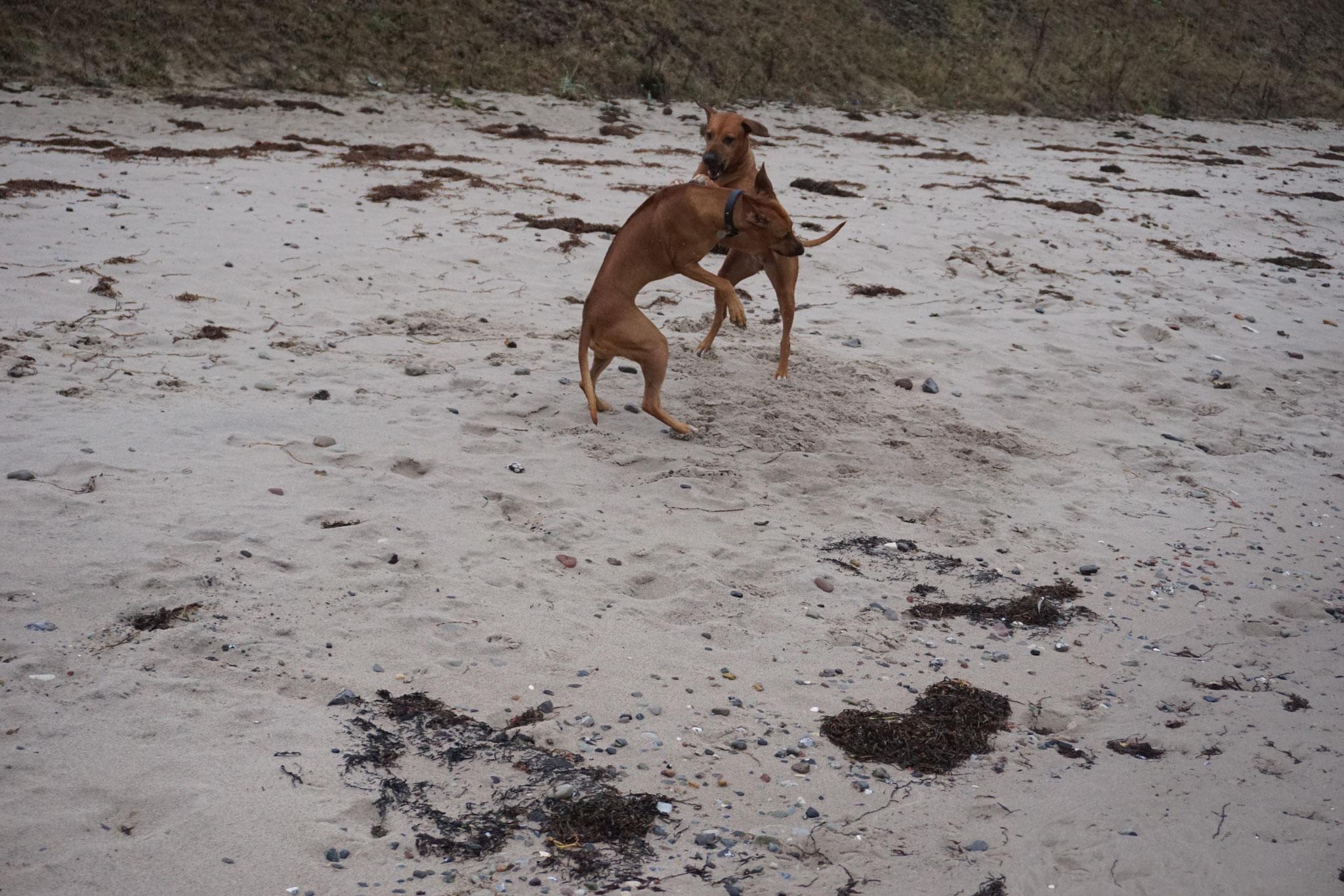 Trommeln fällt im Sand schwer.