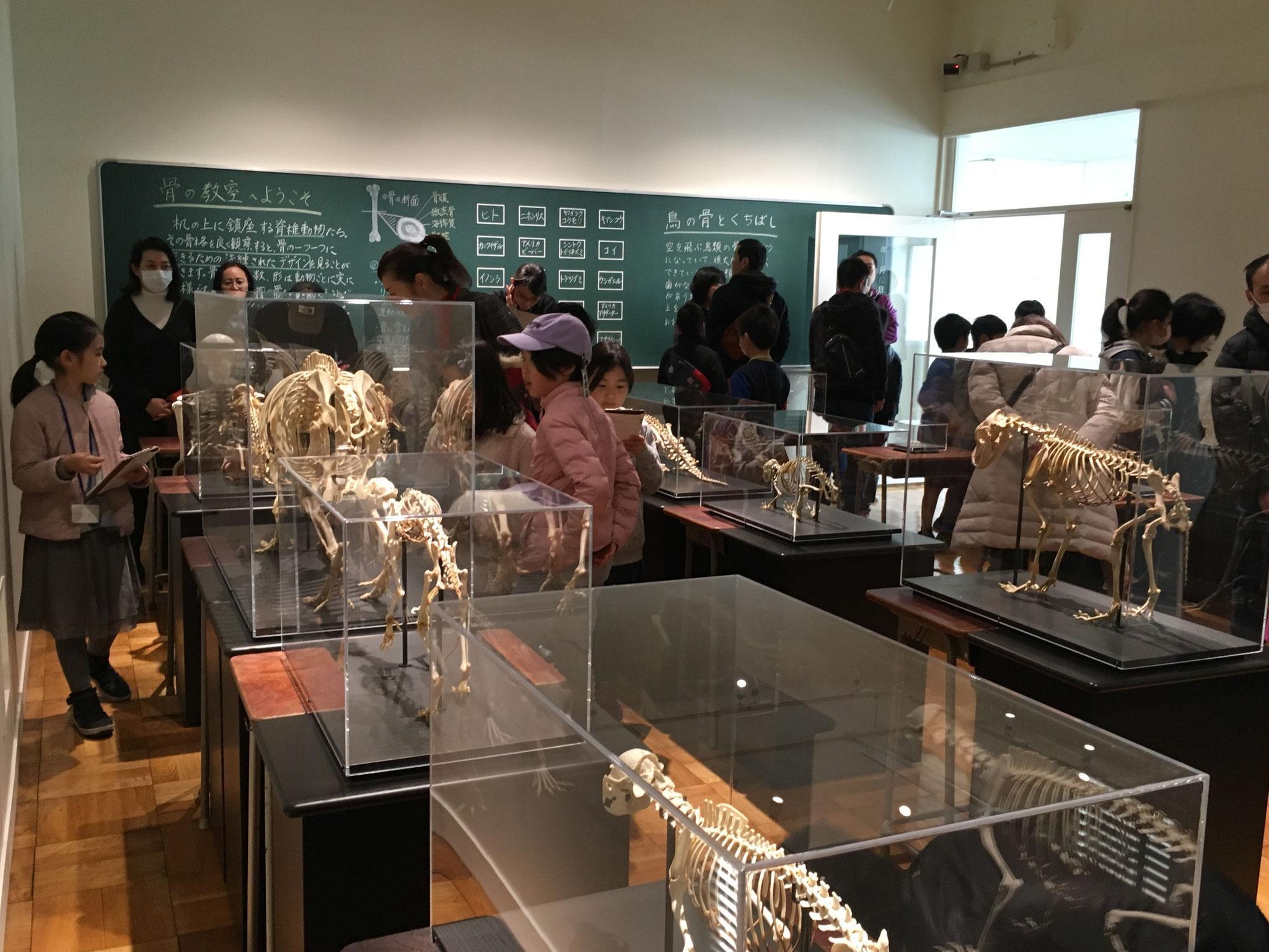 脊椎動物の骨格標本の部屋