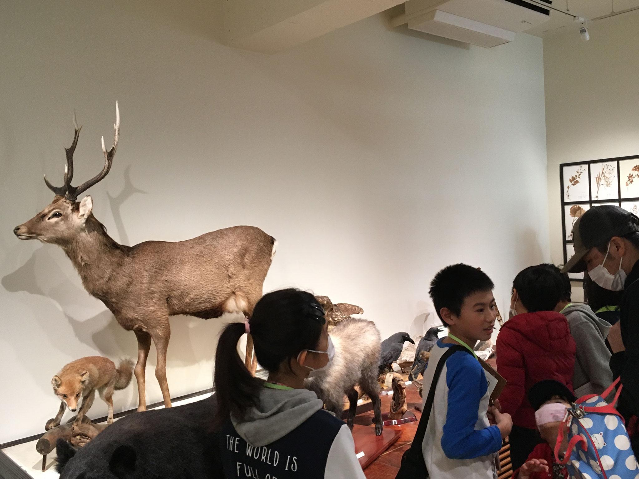 静岡県の多様な生物を標本で展示