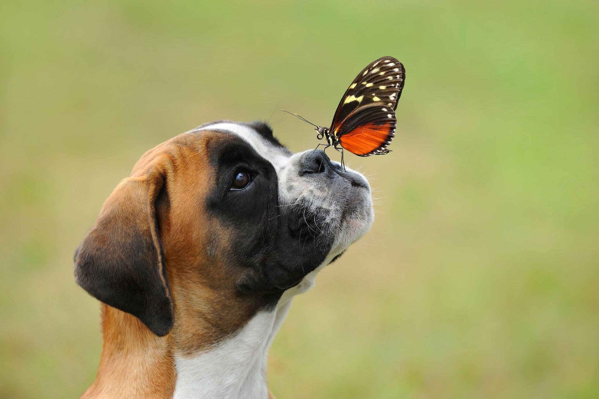 Einsatz von Pflanzenkohle beim Hund
