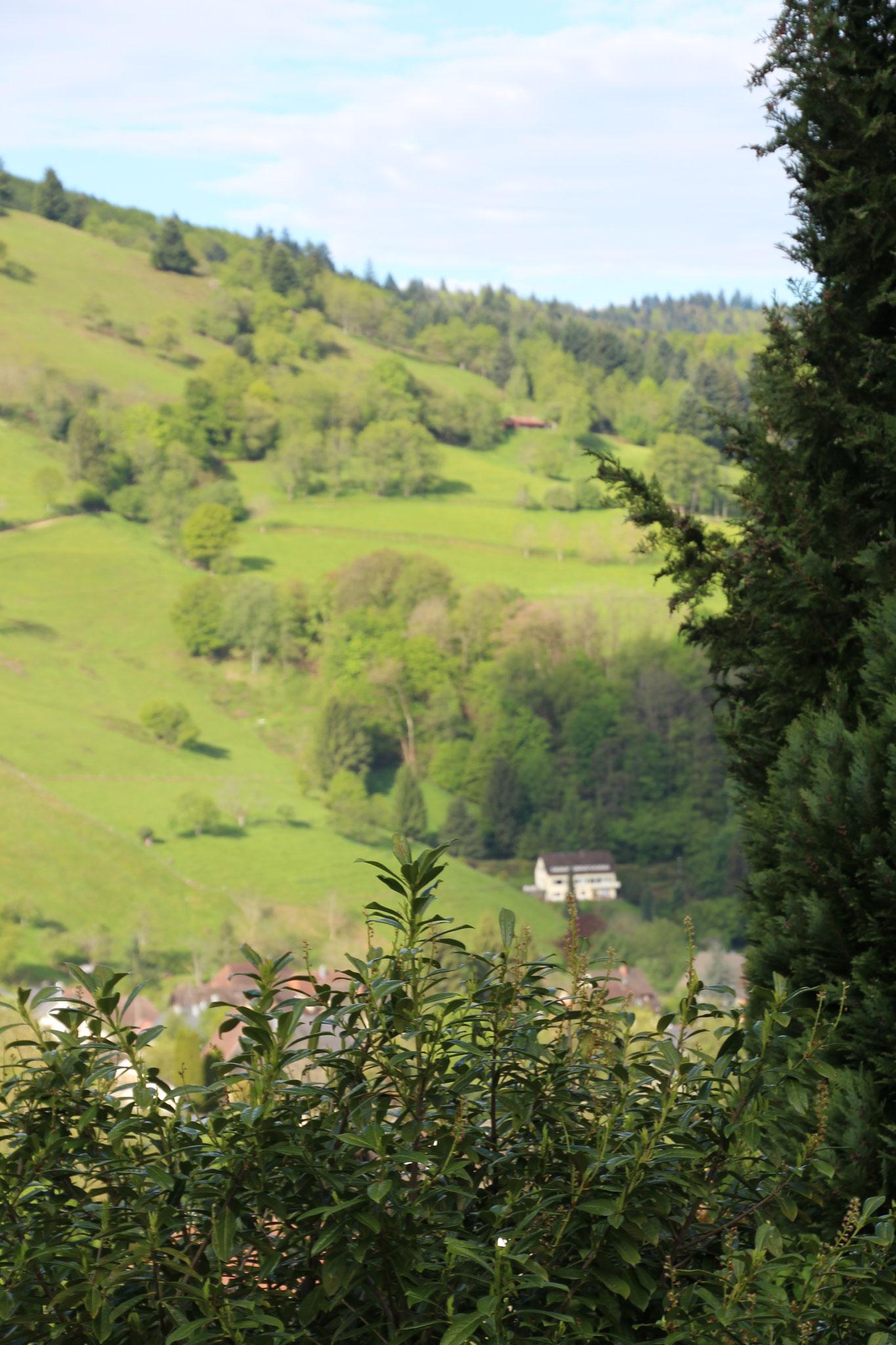 Eine traumhafte Aussicht im Münstertal
