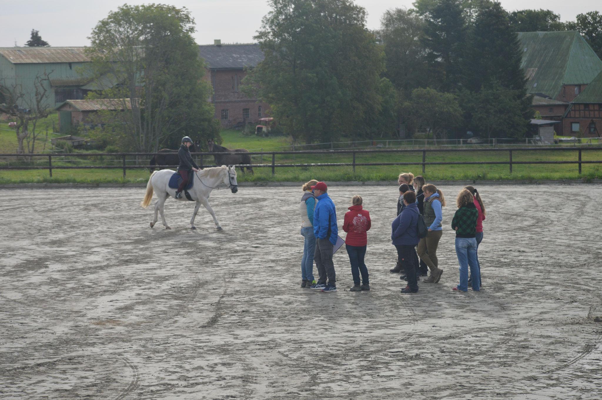 Pferd- und Reiterbeurteilung unter dem Sattel
