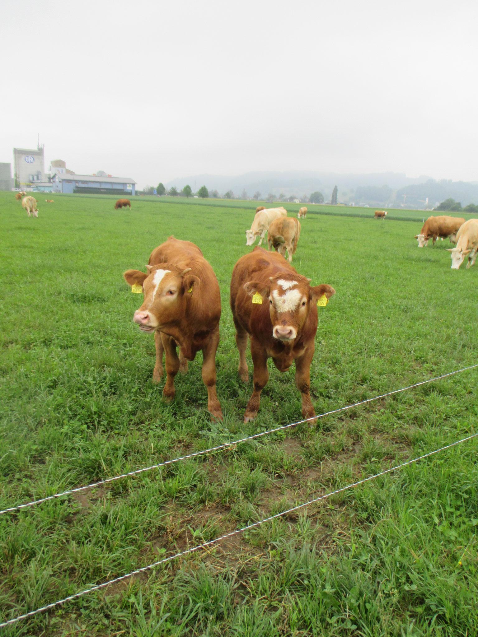 Kühe, Hühner, Säuli - wir waren am Bauernhof