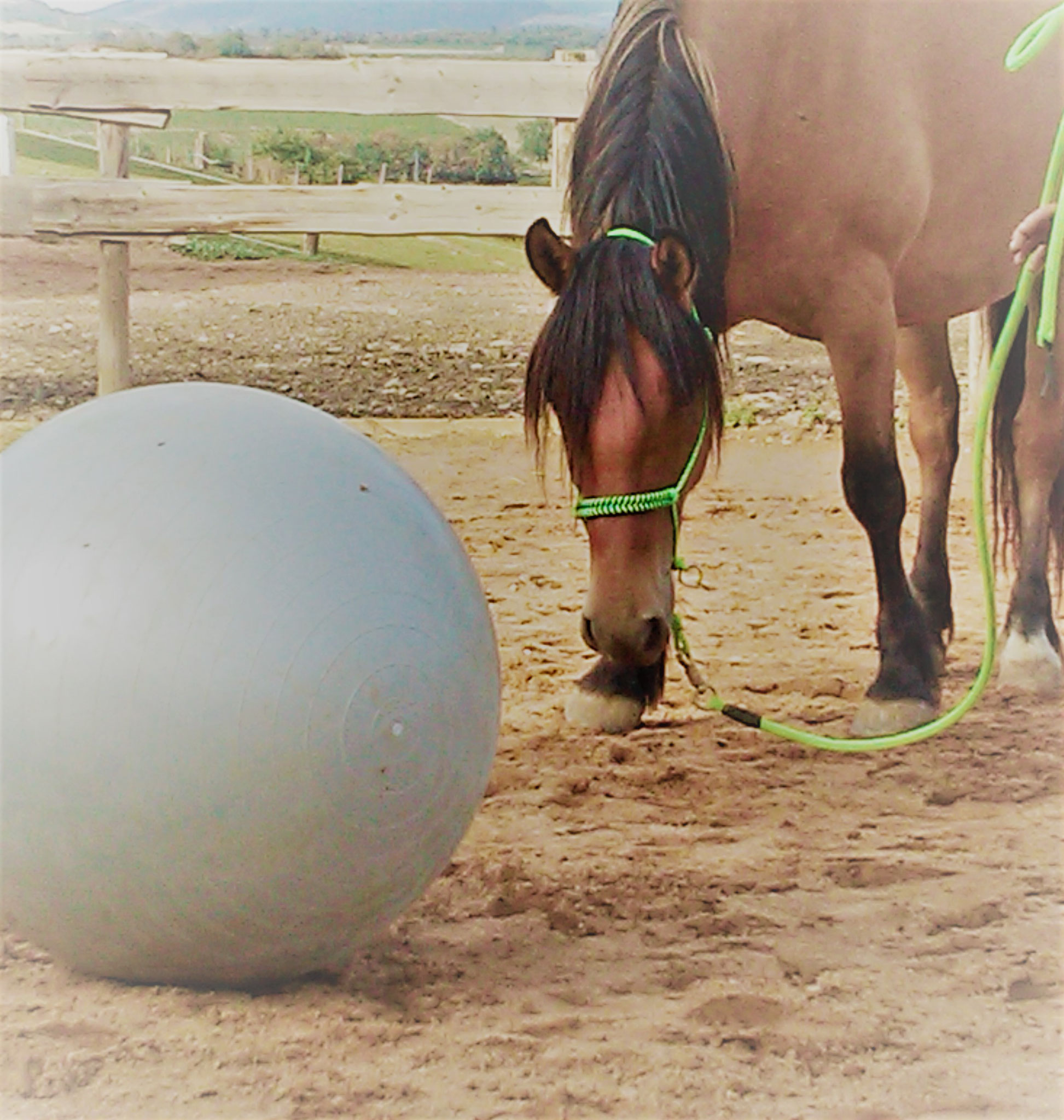 Ballon, licol et longe éthologiques