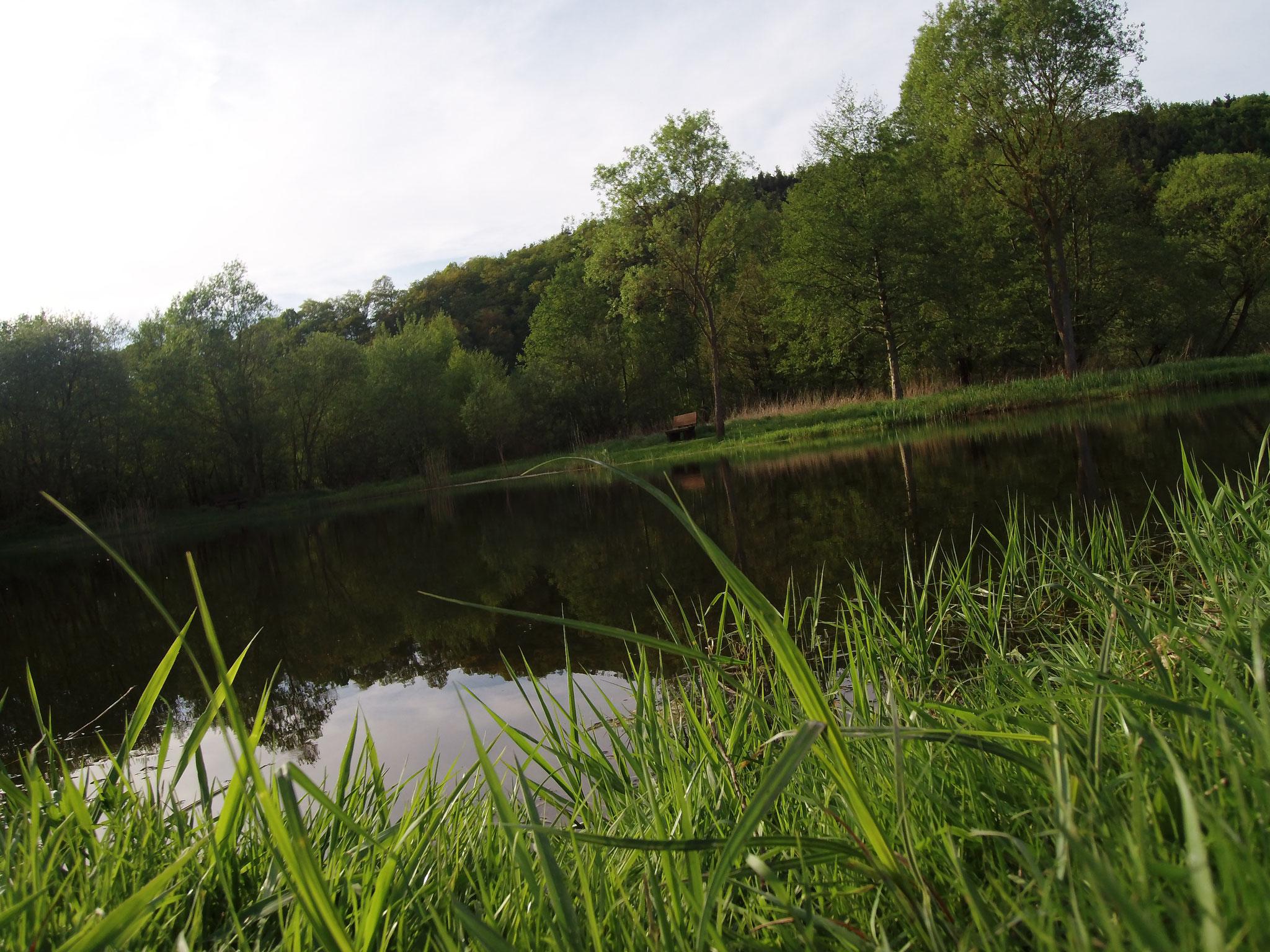 Das Bild ist zwar über der Wasseroberfläche entstanden, es soll aber verdeutlichen, wie gut die Aufnahmequalität (Full HD) der verbauten Kamera ist.