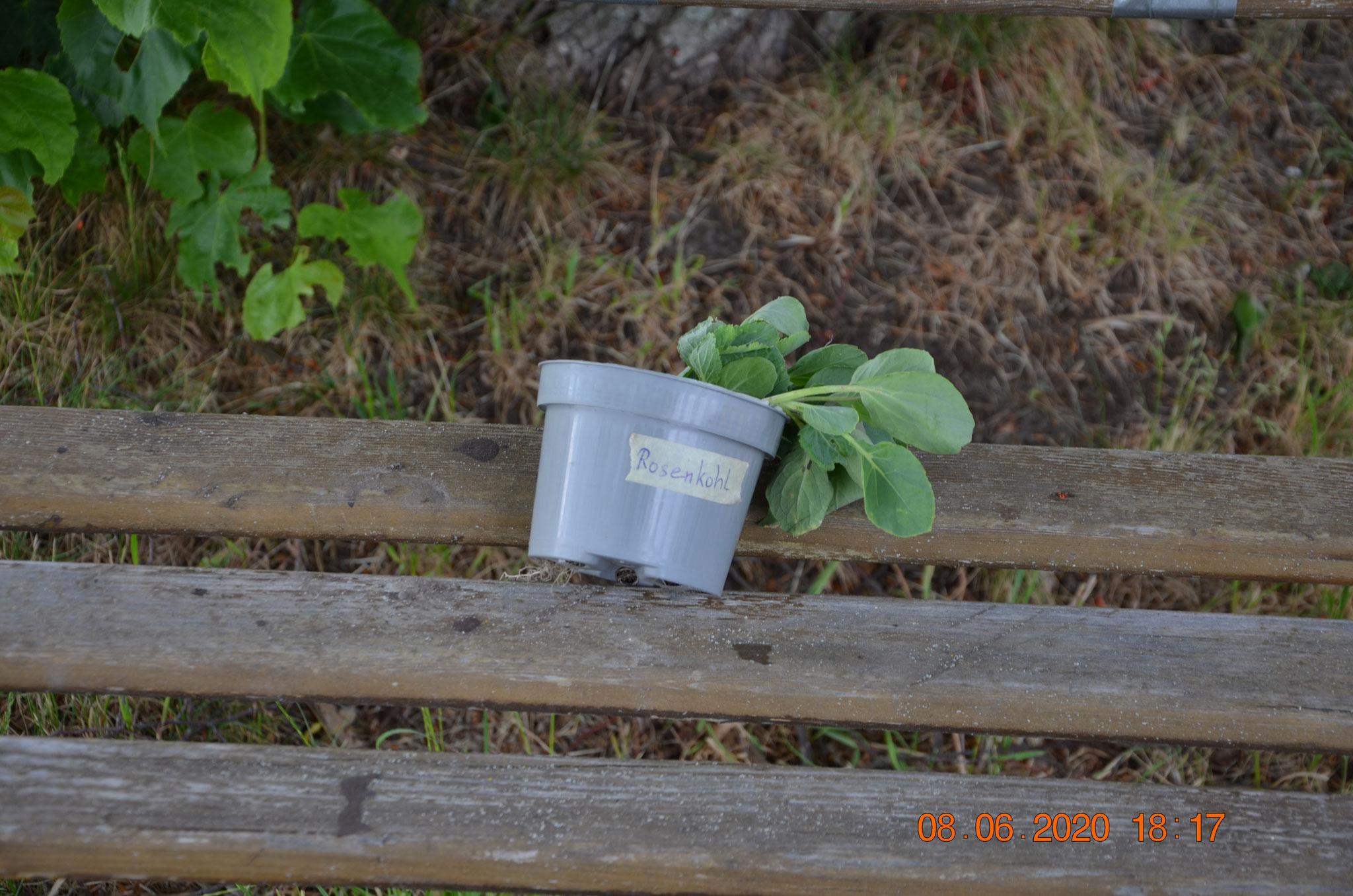 noch ein Tauschplatz für Pflanzen am Vereinshaus