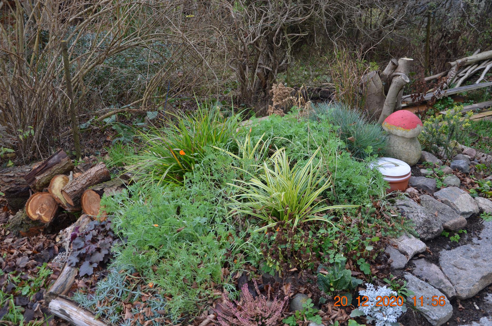 Hochbeet beim Vereinshaus (mit Abwasserbehälter darunter); neu mit Steinpilz
