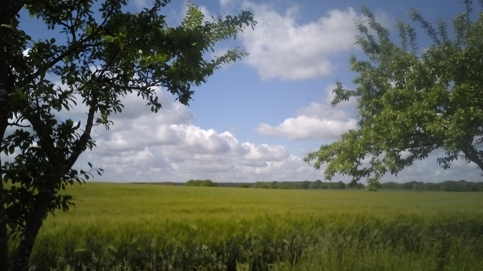 Weite Blicke über Felder