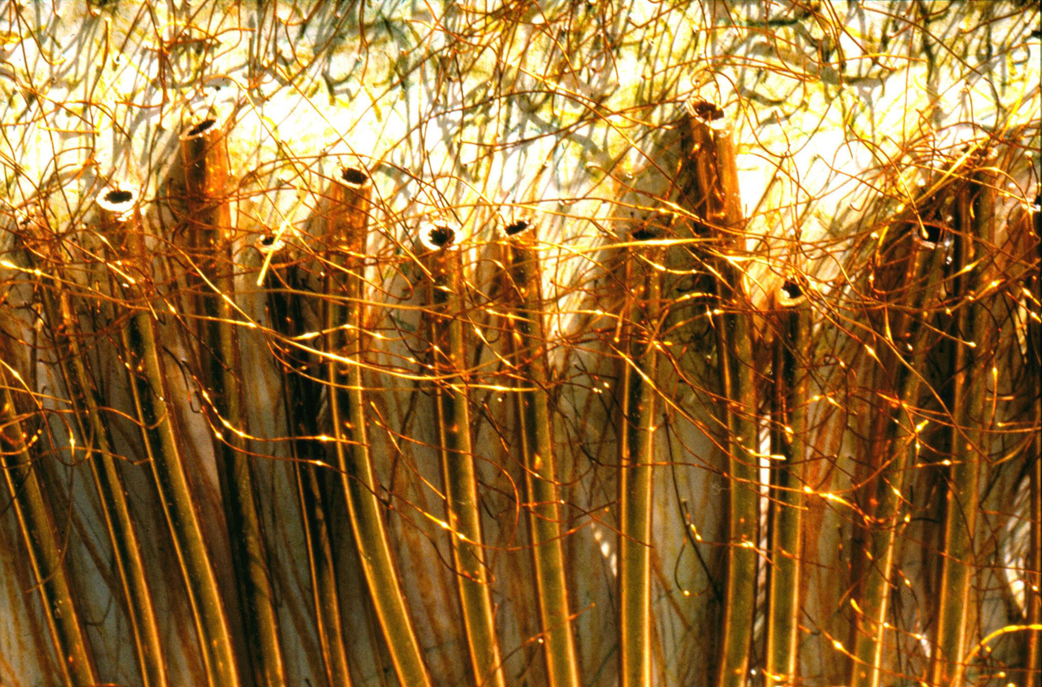 het koperrode bos, detail