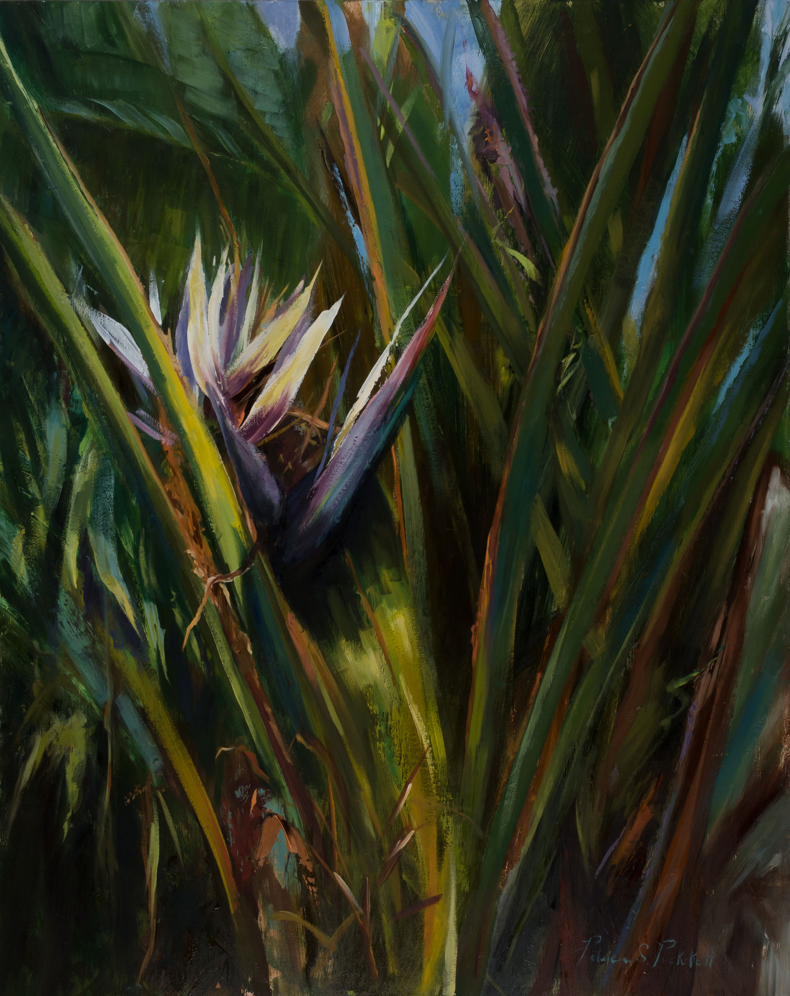 BIRD OF PARADISE --- Medium: Oil on a Board --- Size: 24 X 30