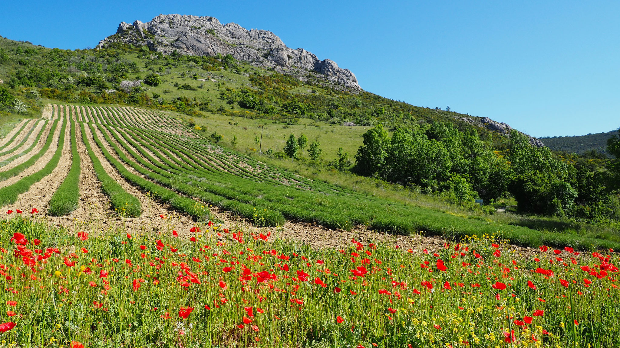 Izon Nature : hébergements et table d'hôtes insolites et écoresponsables dans la Drôme provençale, trek dans la Méouge