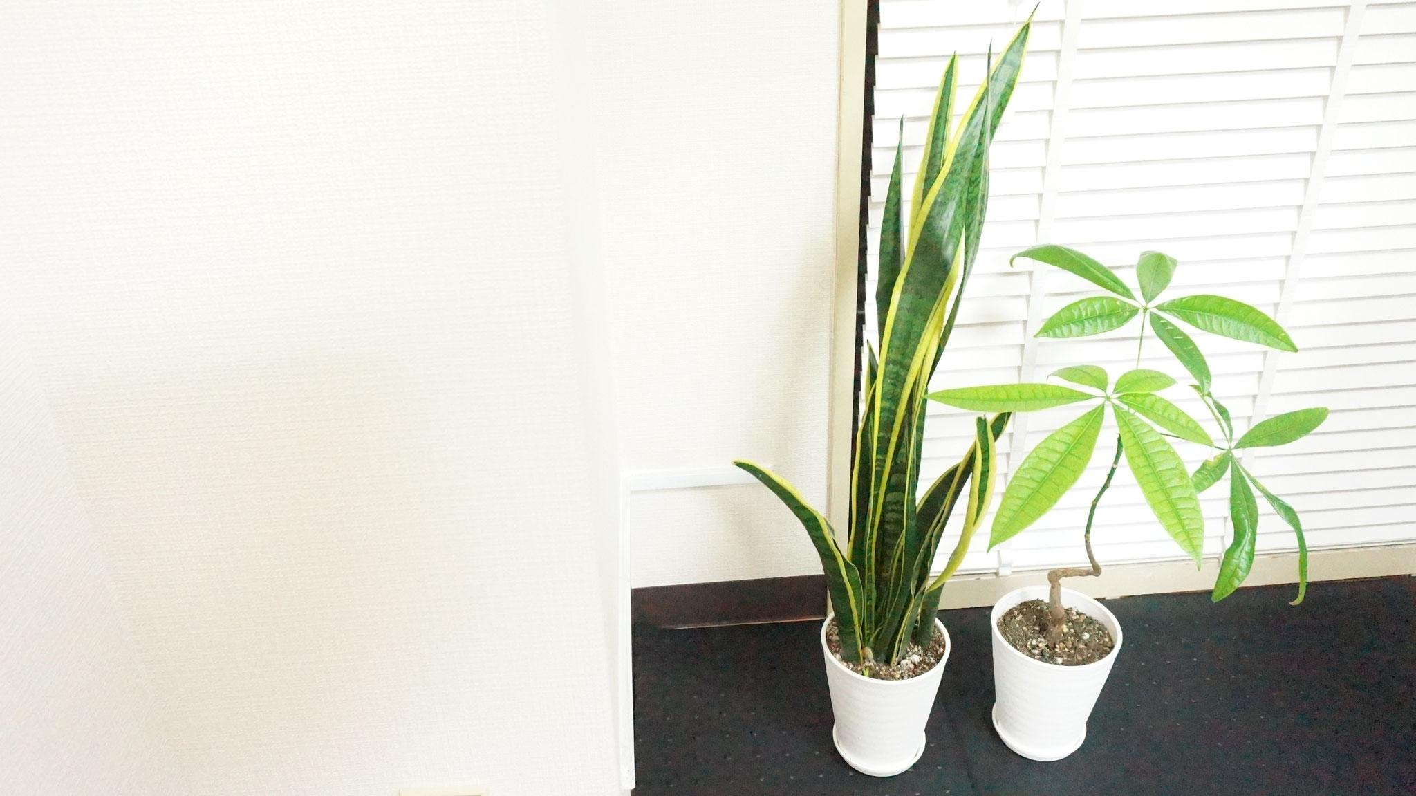 トレーニングに適した環境(空気清浄効果のある植物の設置)