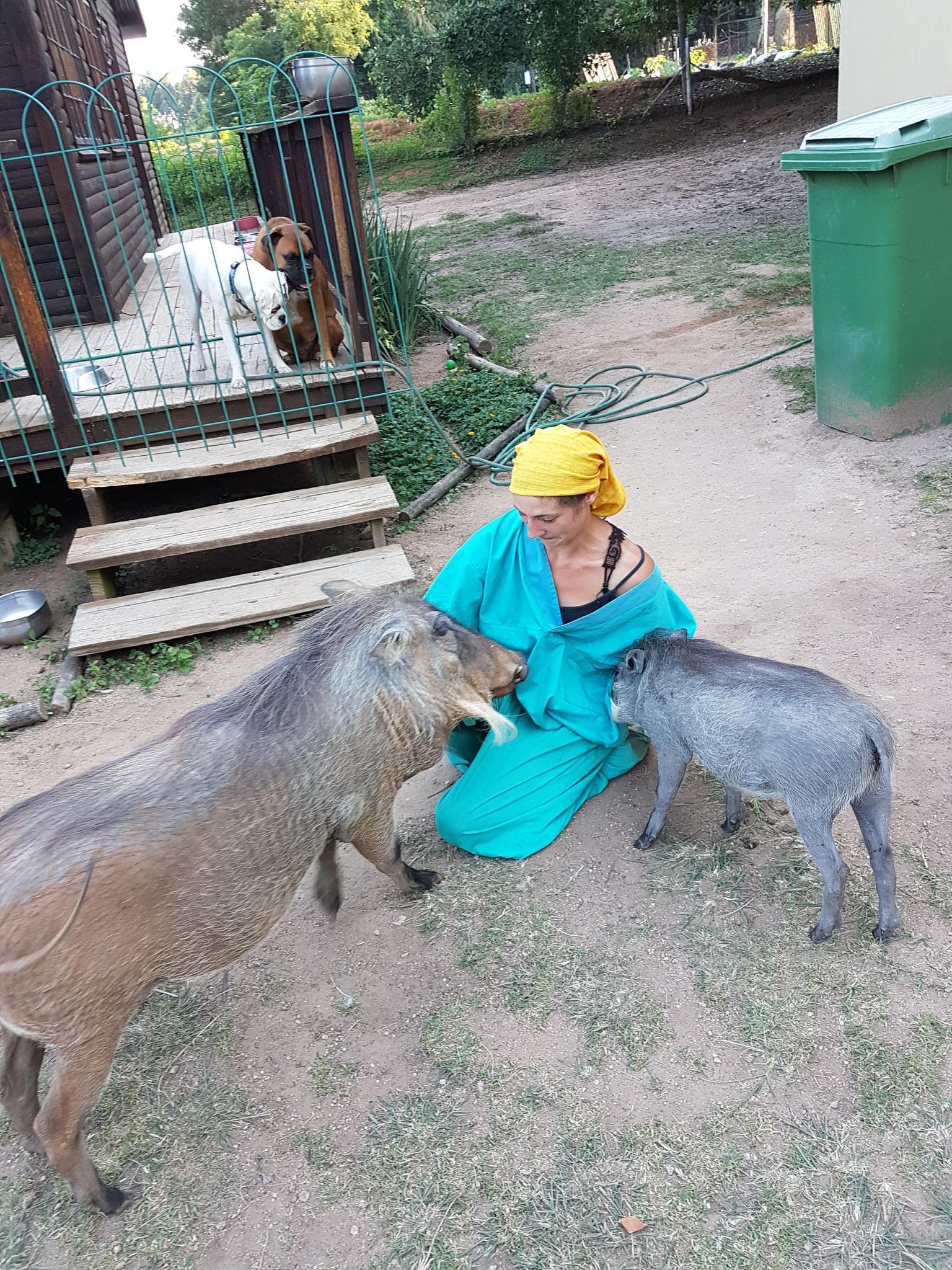 Pumba et Chloé les phacochères