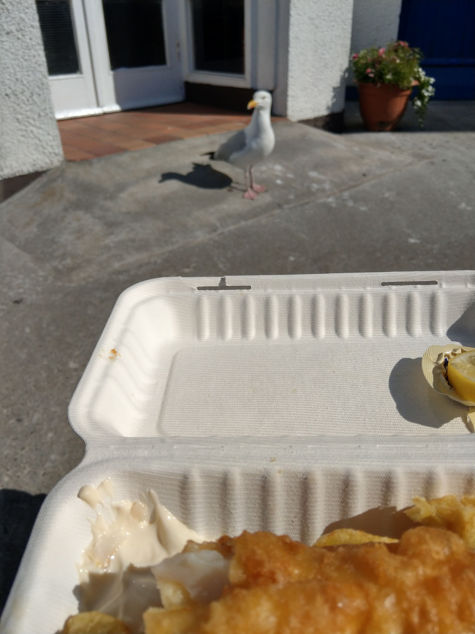 Fish & Chips und Futterneid