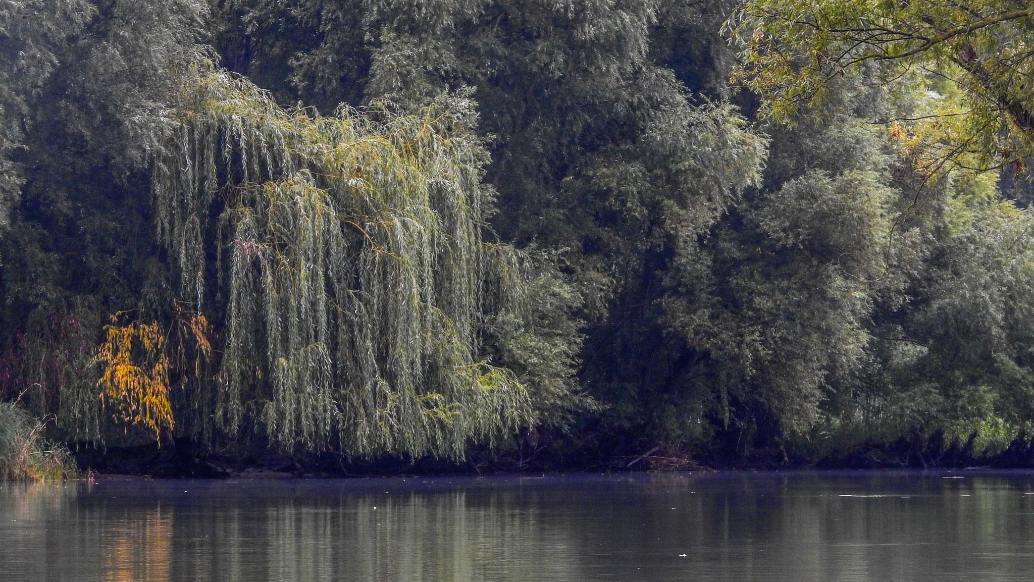 AOC Herbsttreffen Mosoni Donau