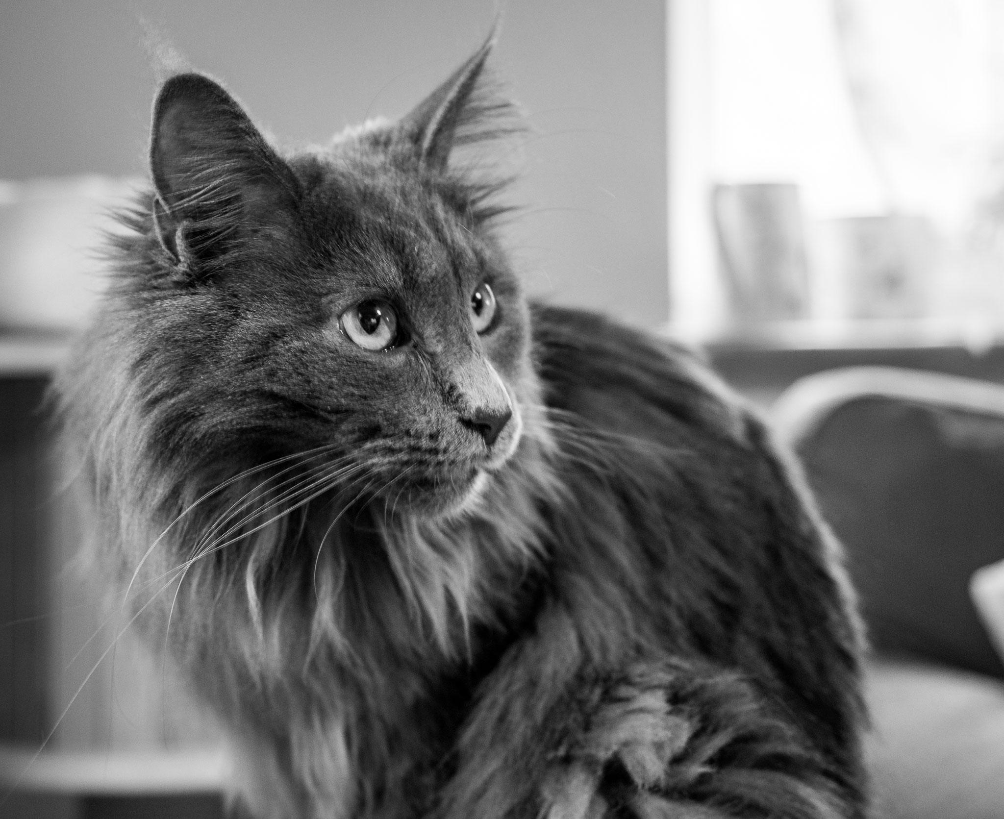 Babblfisch: Padme – wenn Star Wars Fans Ihre Katzen benennen