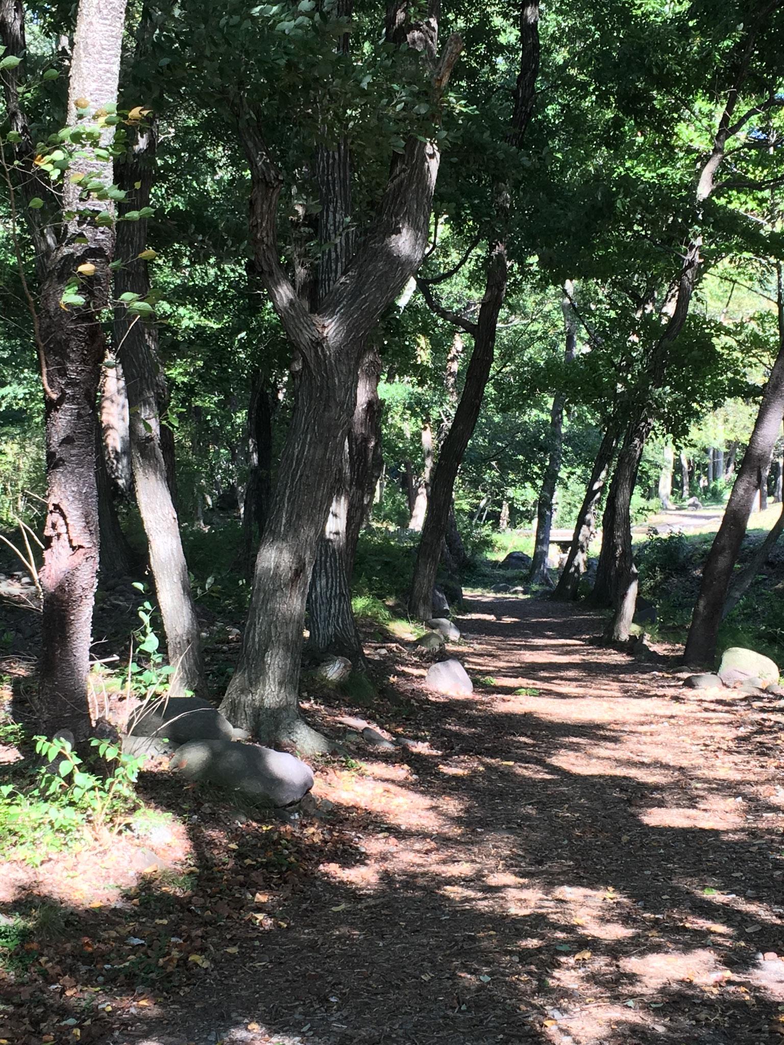 アパート前の南西広場からの遊歩道コース