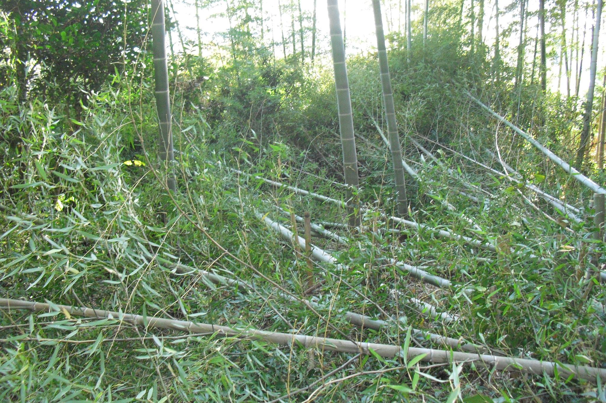 藤枝市堀之内の竹林、放牧中