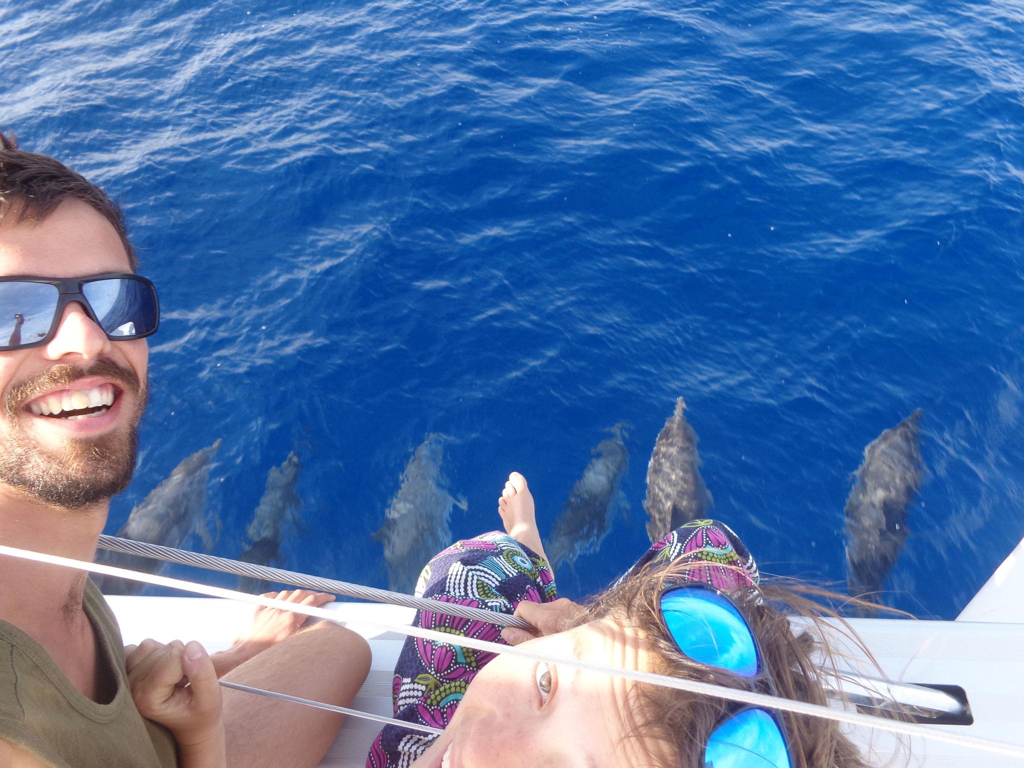 et les dauphins !