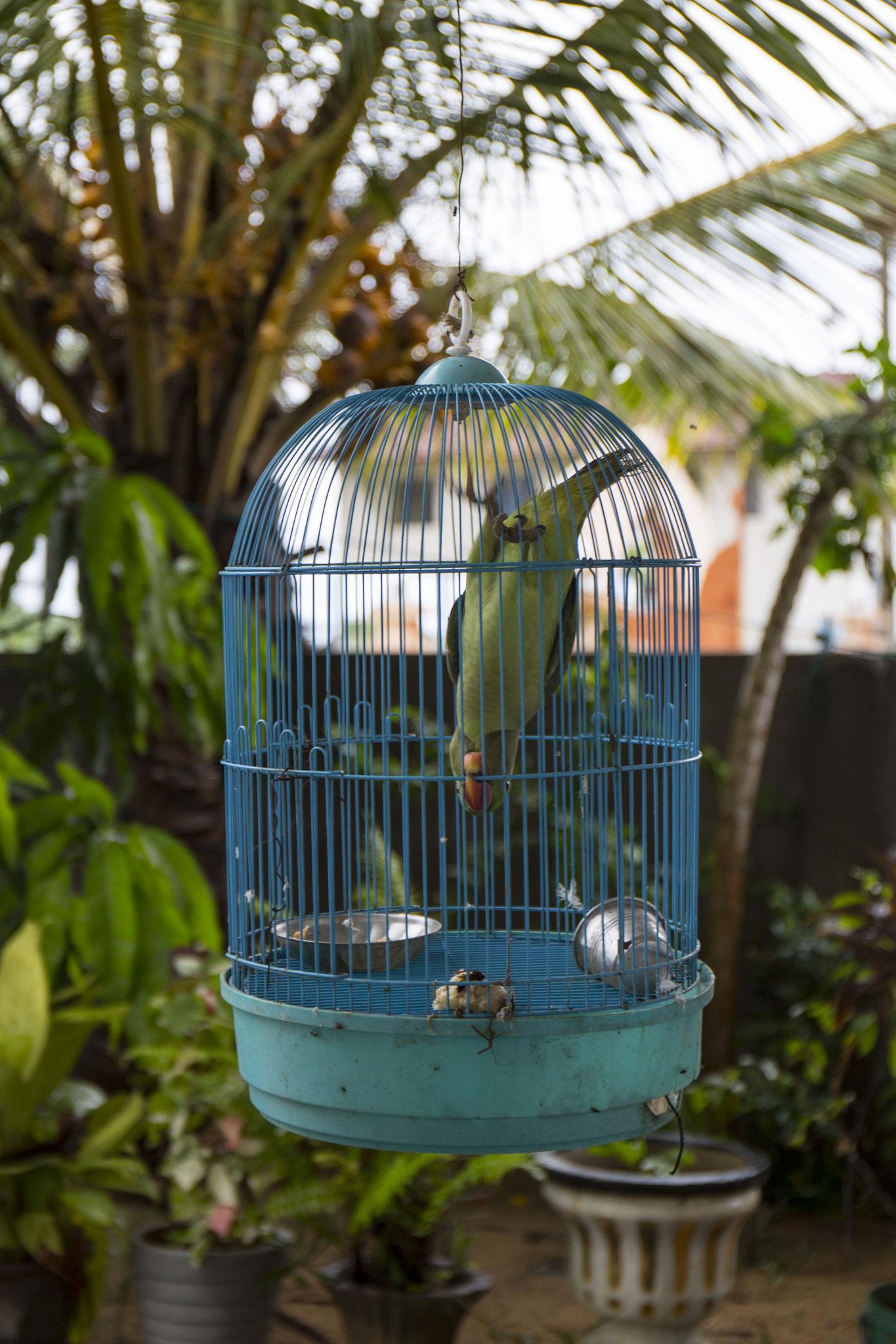Ammas Papagei hängt am Eingang ihres Gasthauses. Mullaitivu, 2018