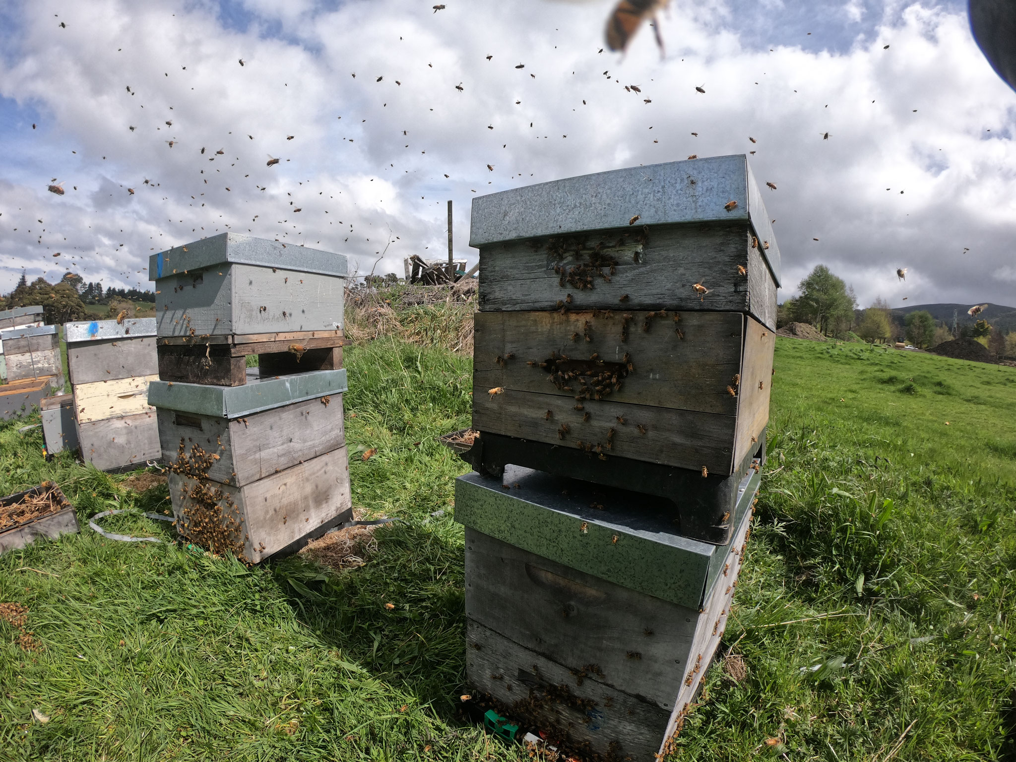 Des abeilles dans tous les sens ! Même dans la combinaison.