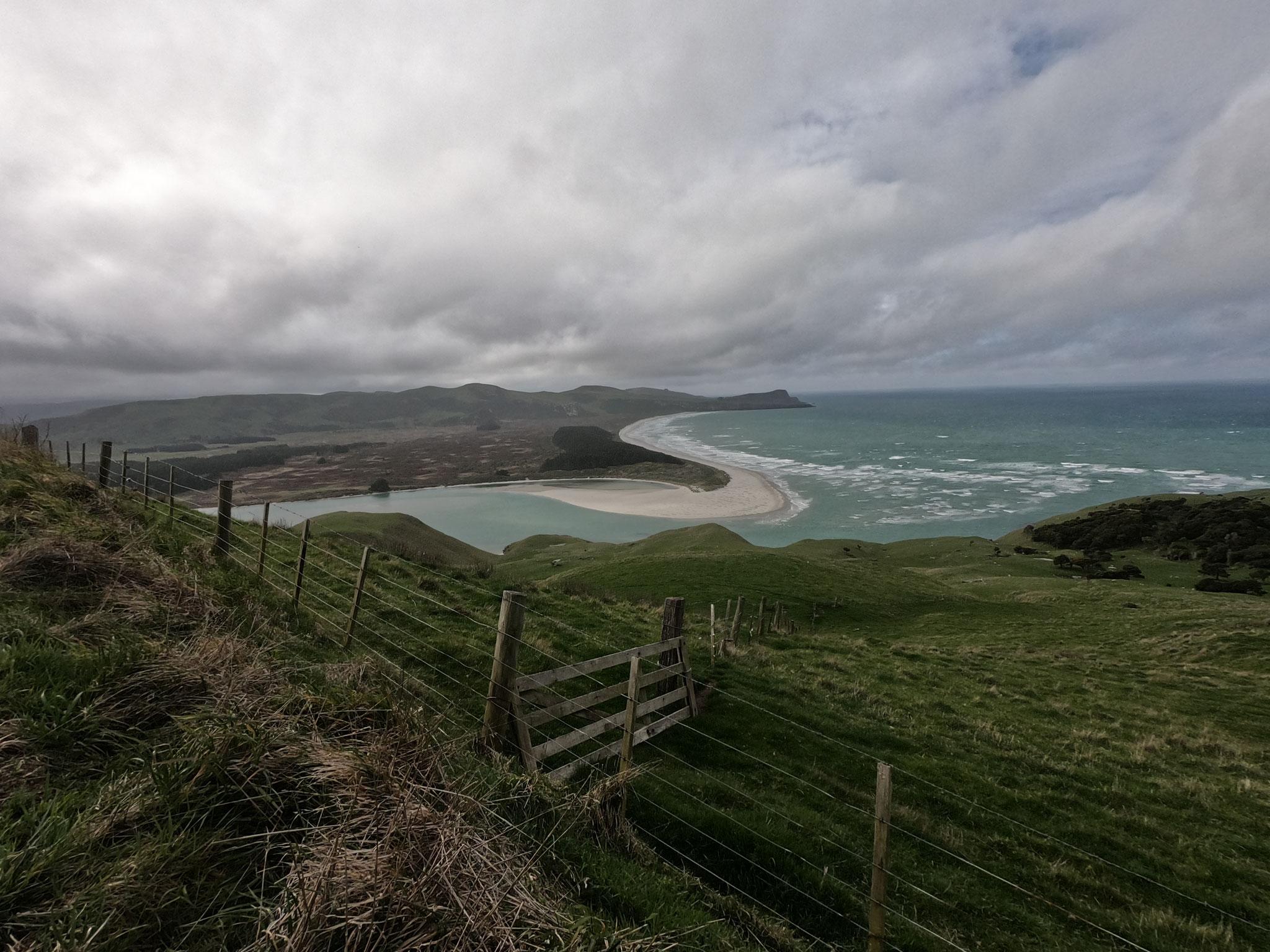 Otago Peninsula - Wickliffe Bay