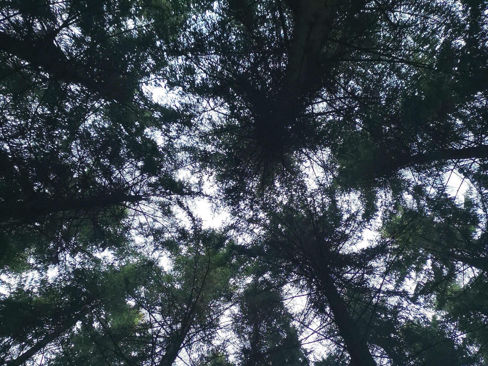 entspannter Blick in die Baumkronen