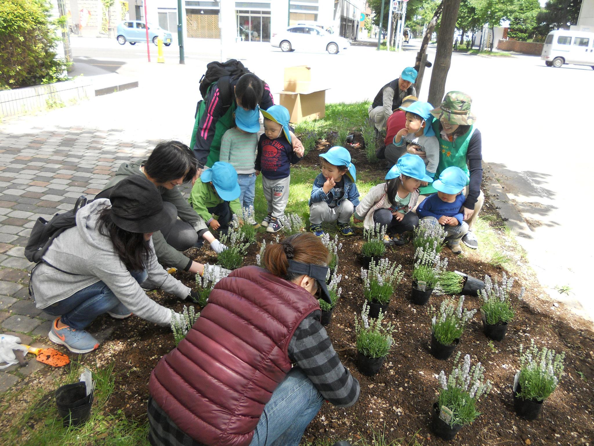 桑園交流ネットワーク:花いっぱい運動ボランティア(西16丁目緑道)