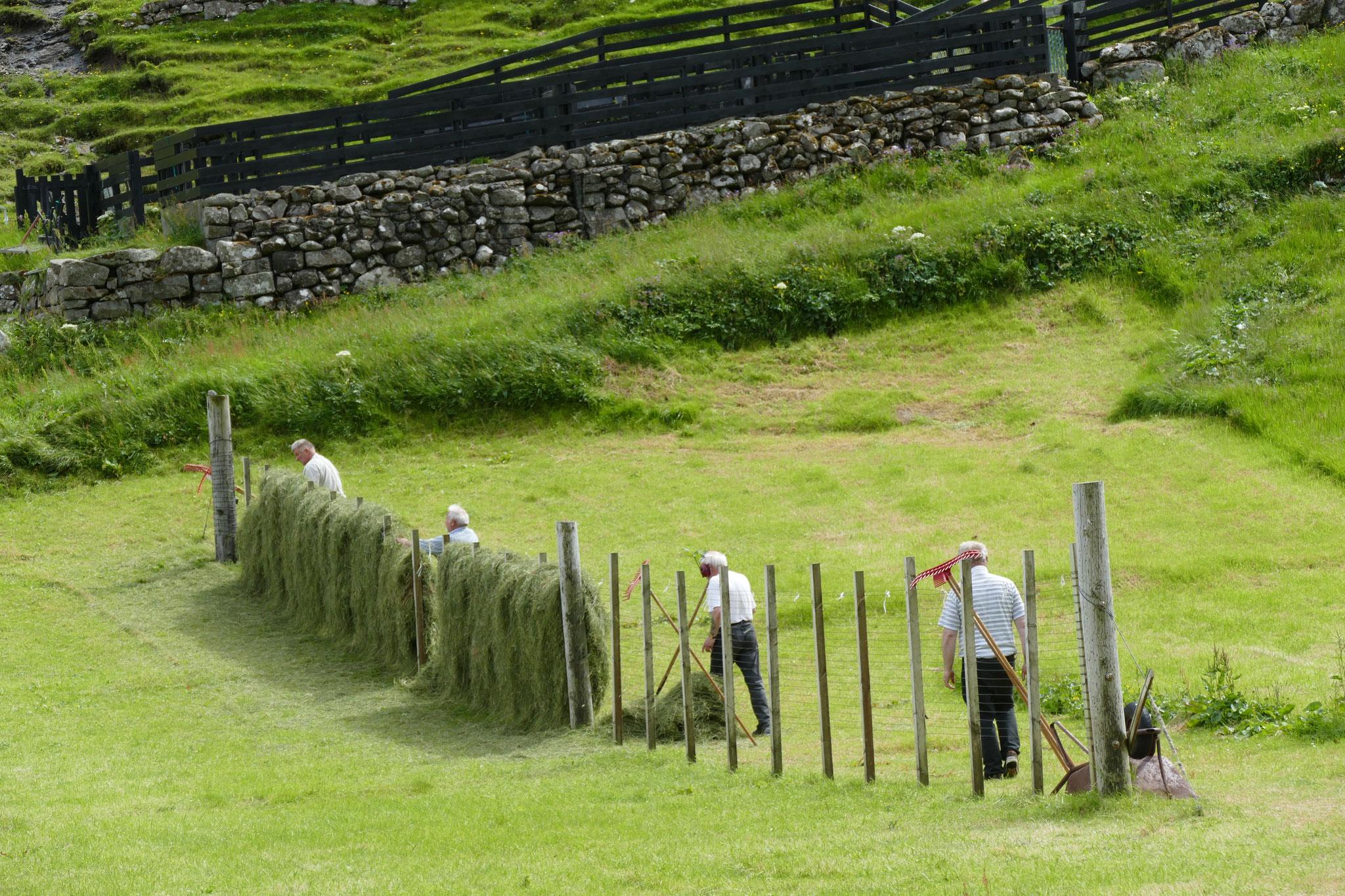 Die Bauern beim Gras trocknen. Geht auch so.