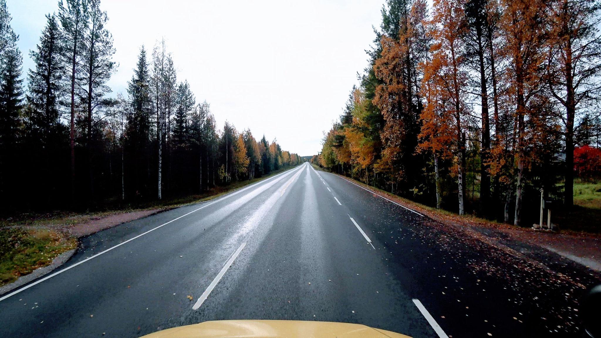 In Finnland gibt es vor allem Eins.... Wald. Und dann Wald und nochmals Wald