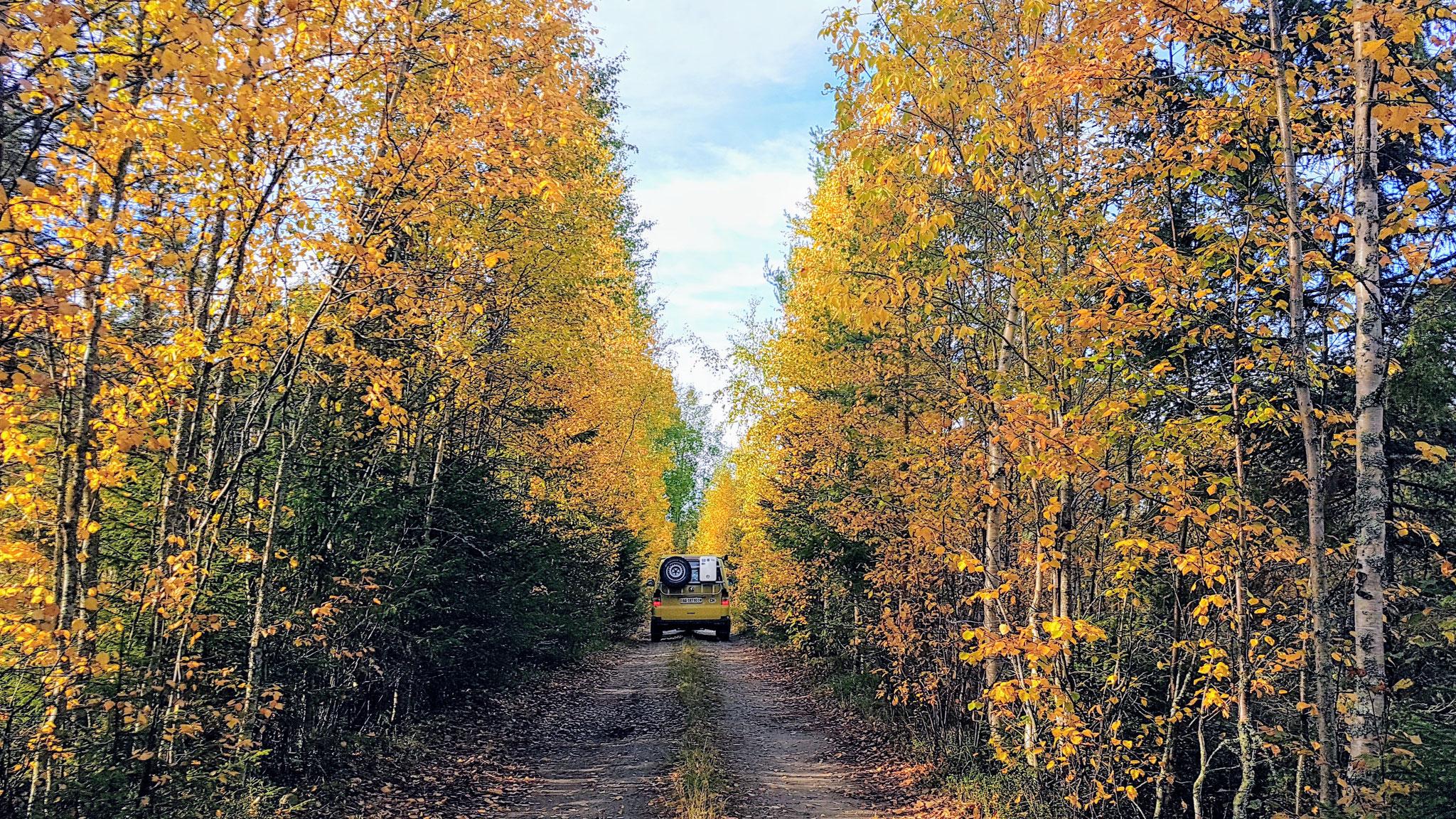 Ton in Ton mit dem Finnischen Wald
