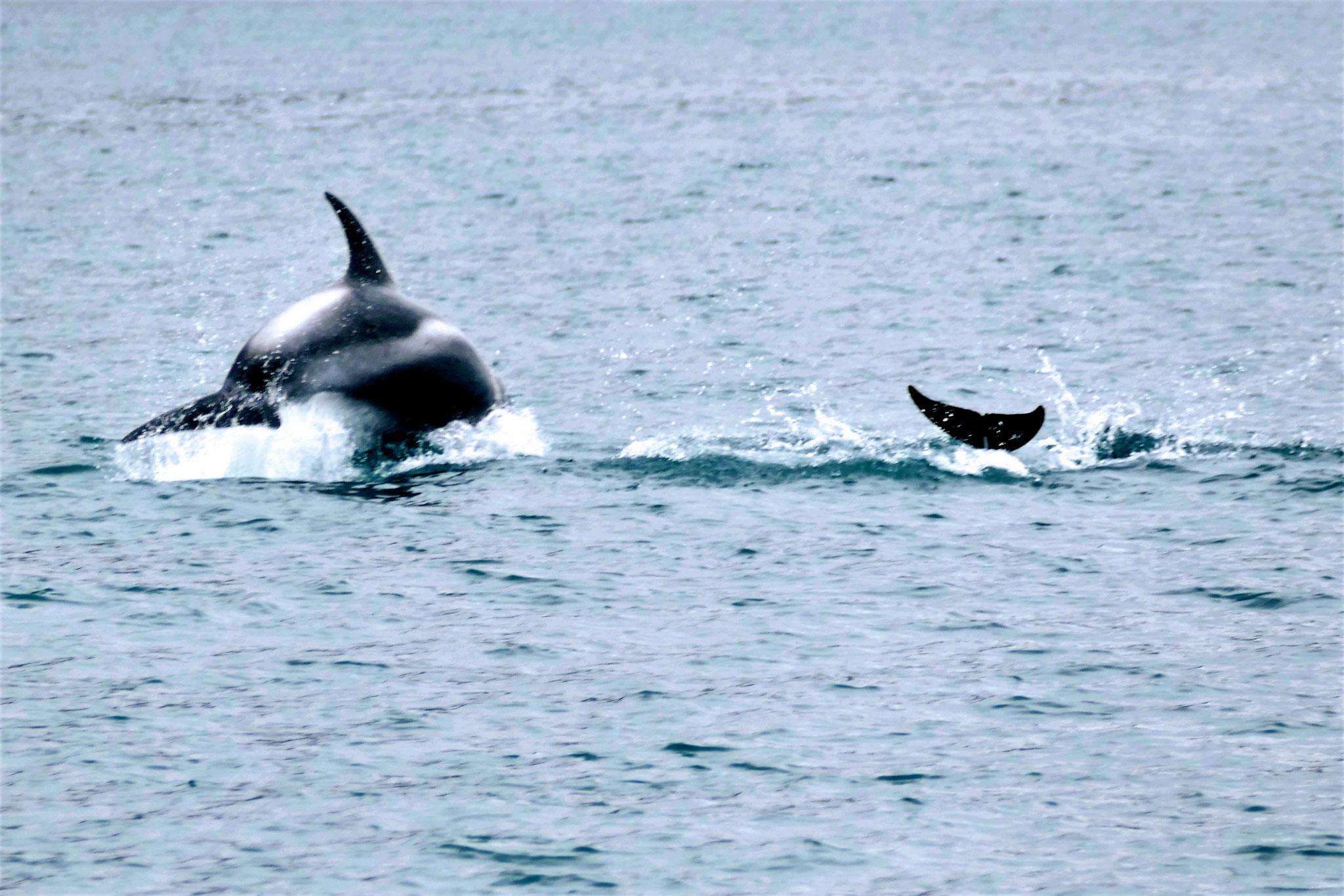...und die Delfine....