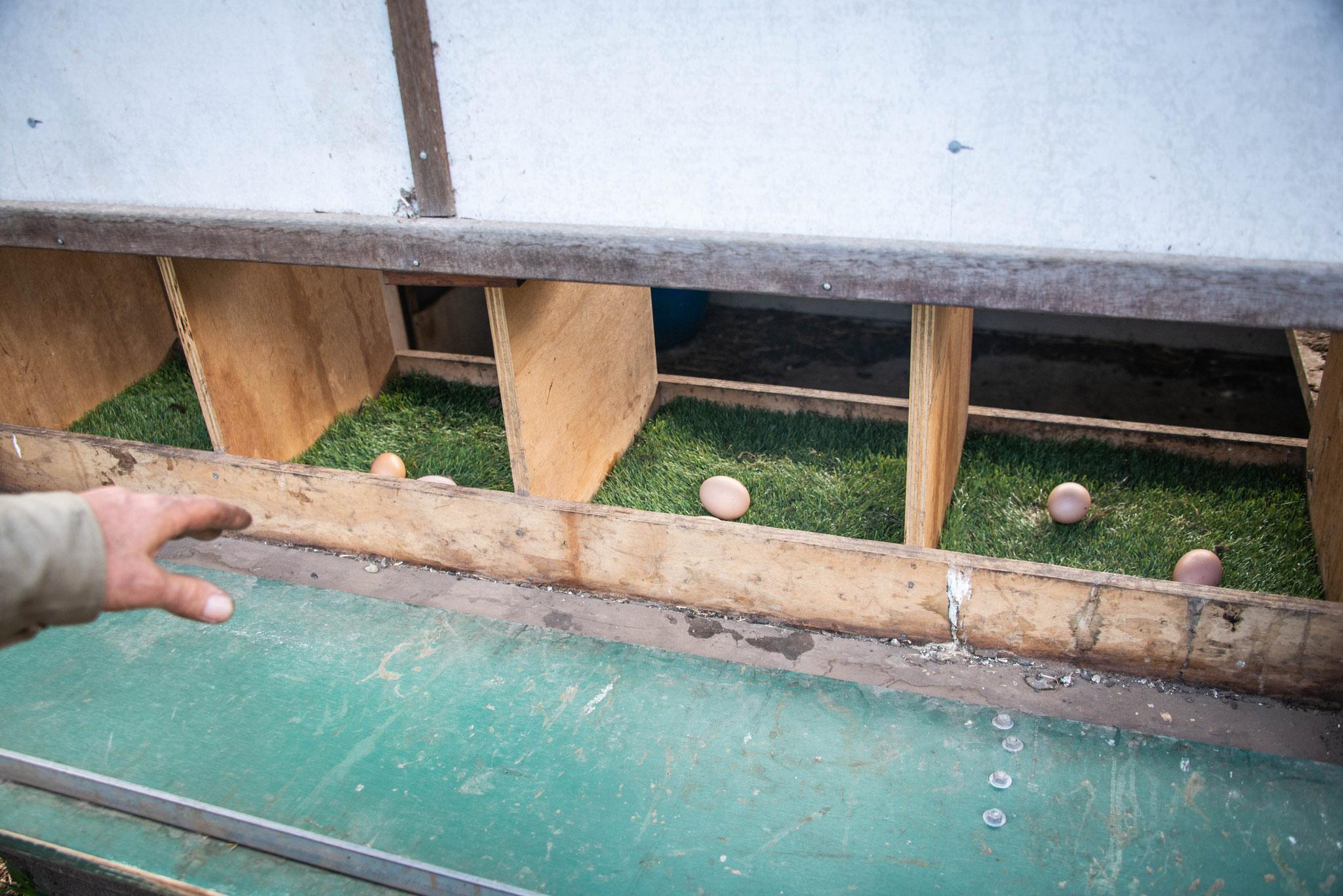 Le seul endroit où il est acceptable d'avoir de l'herbe synthétique (facile à laver) - the only acceptable place for synthetic grass! (easy to wash)