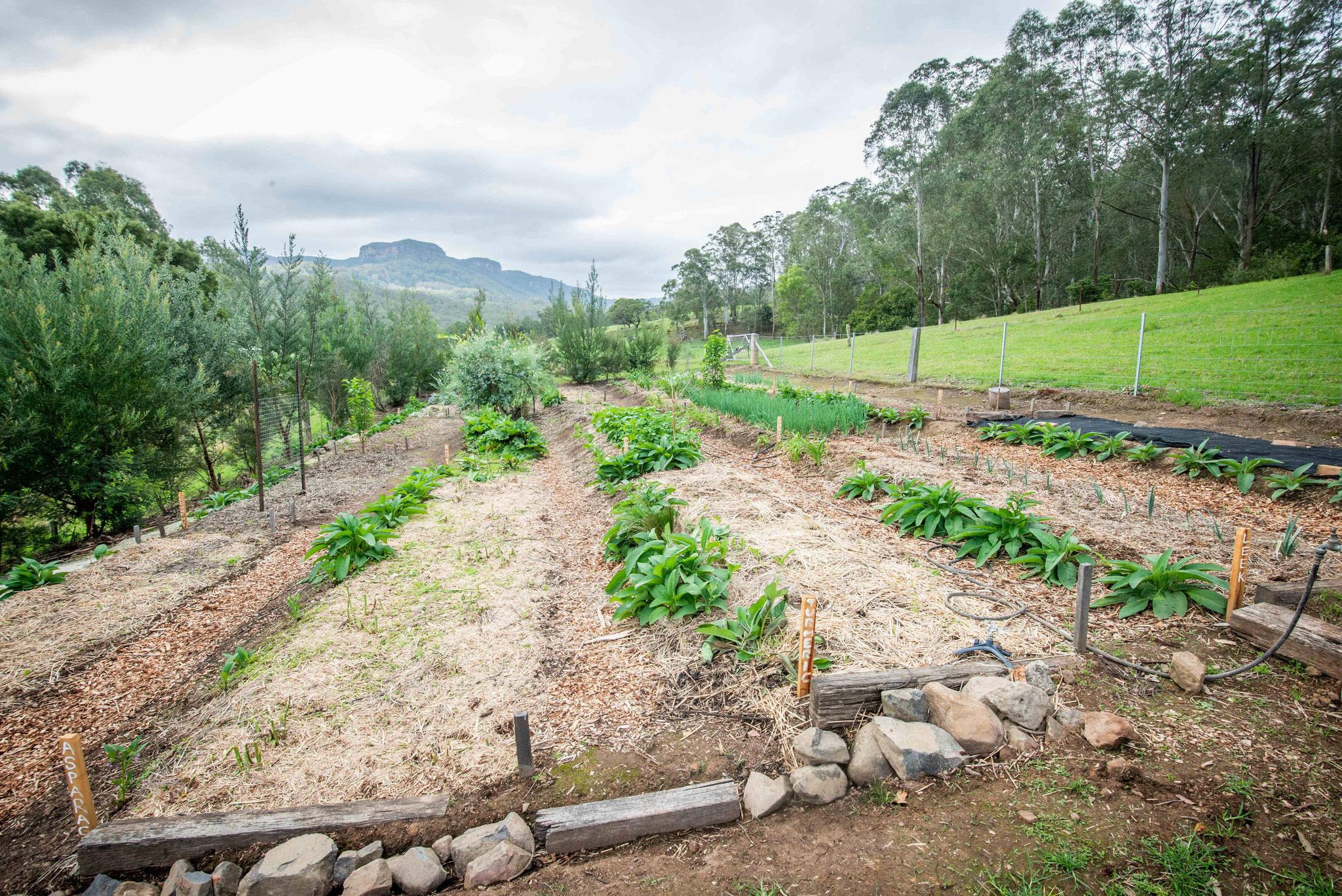 Le jardin des vivaces - the perenial garden