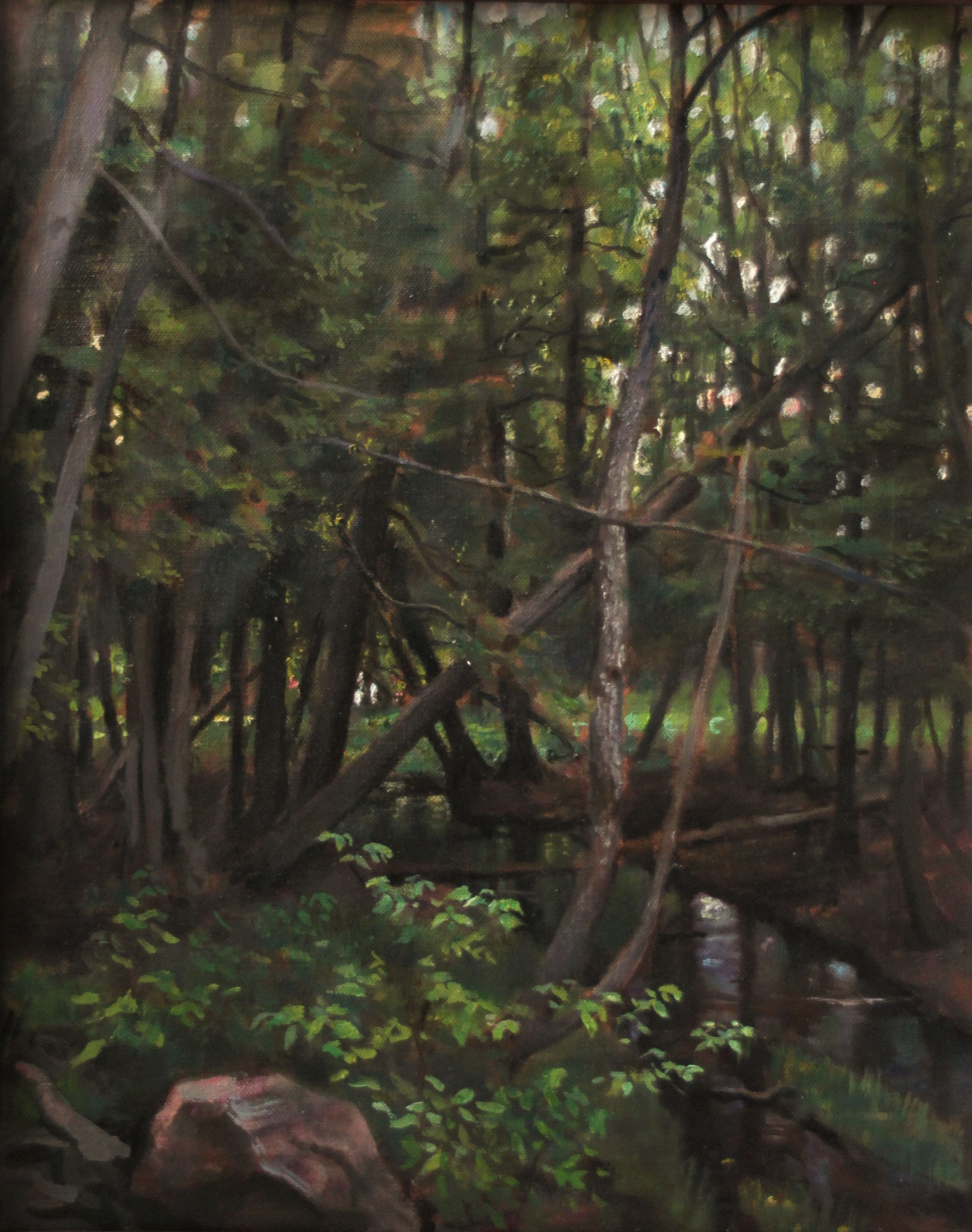 CEDAR FOREST 20 x16 oil on fine linen by Cyril Leeper