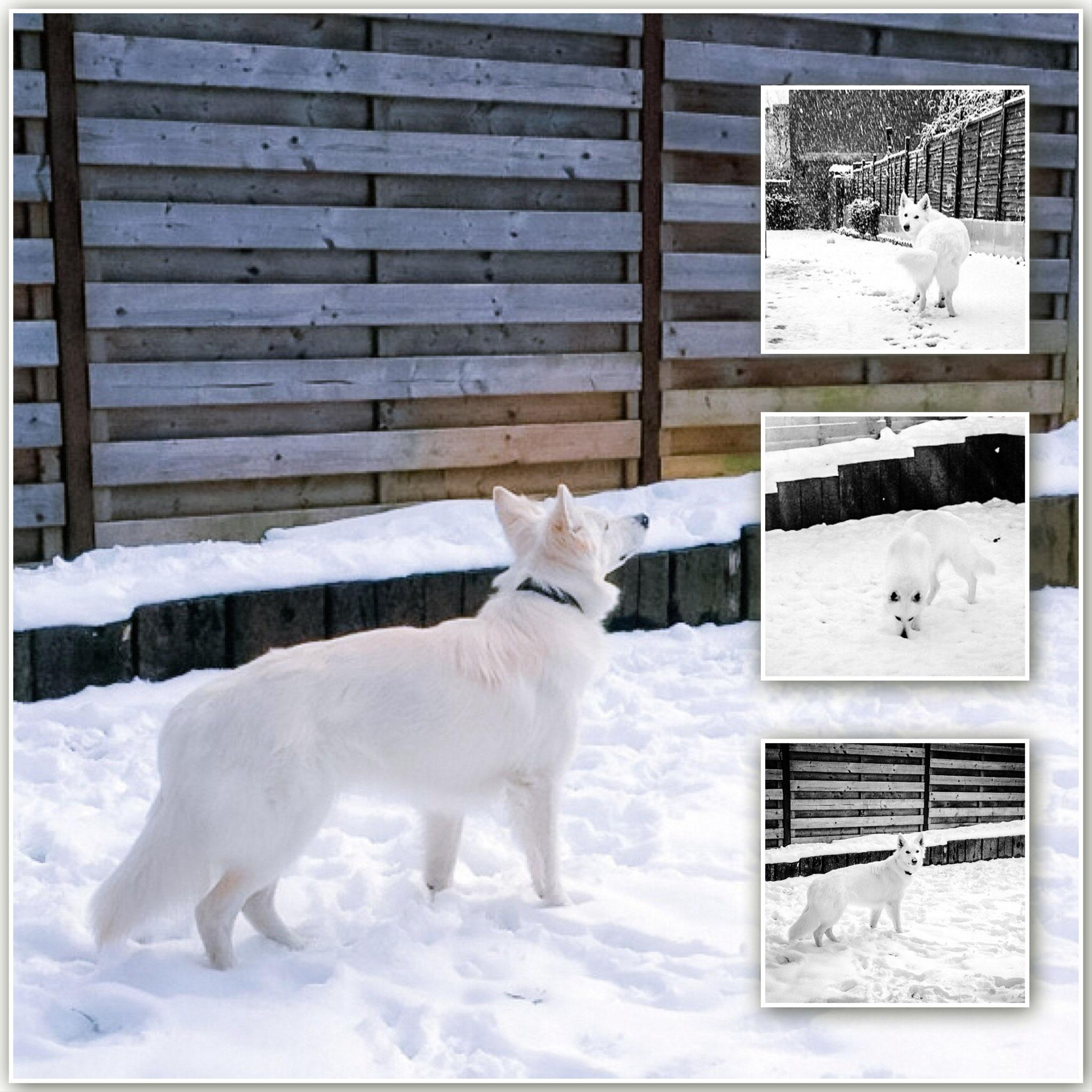 Kaly in de sneeuw