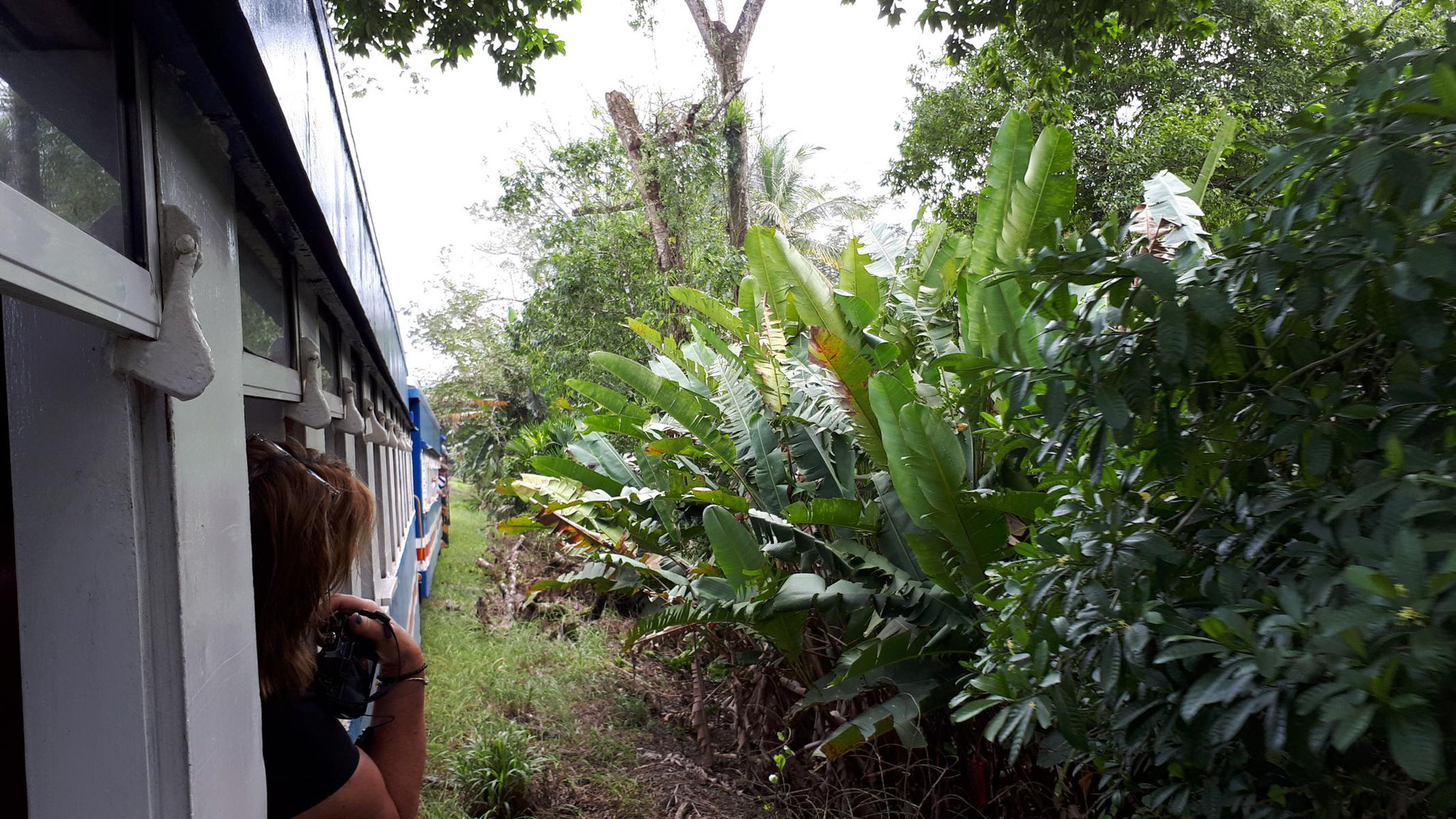 Zugfahrt durch den Regenwald