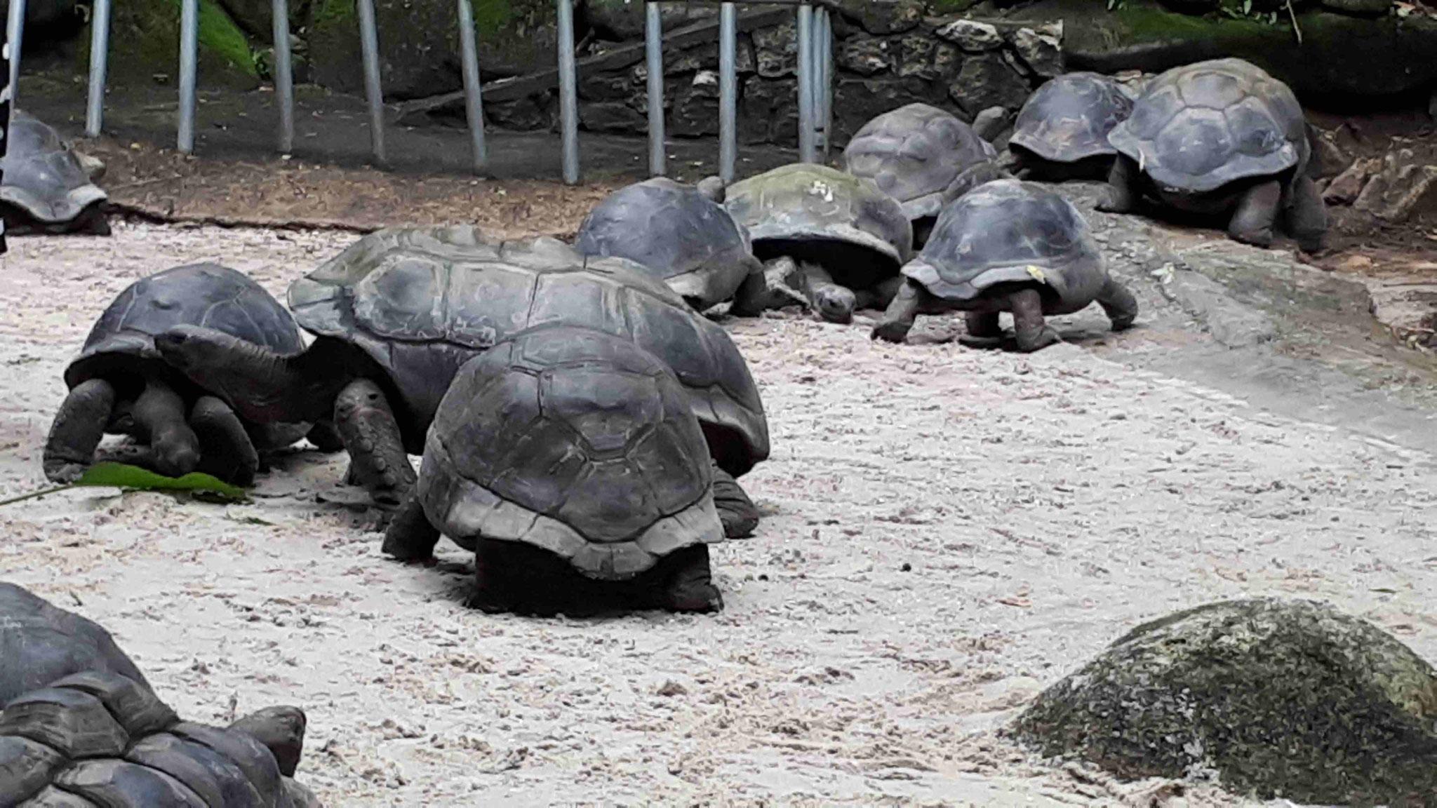 Botanischer Garten -Schildkröten