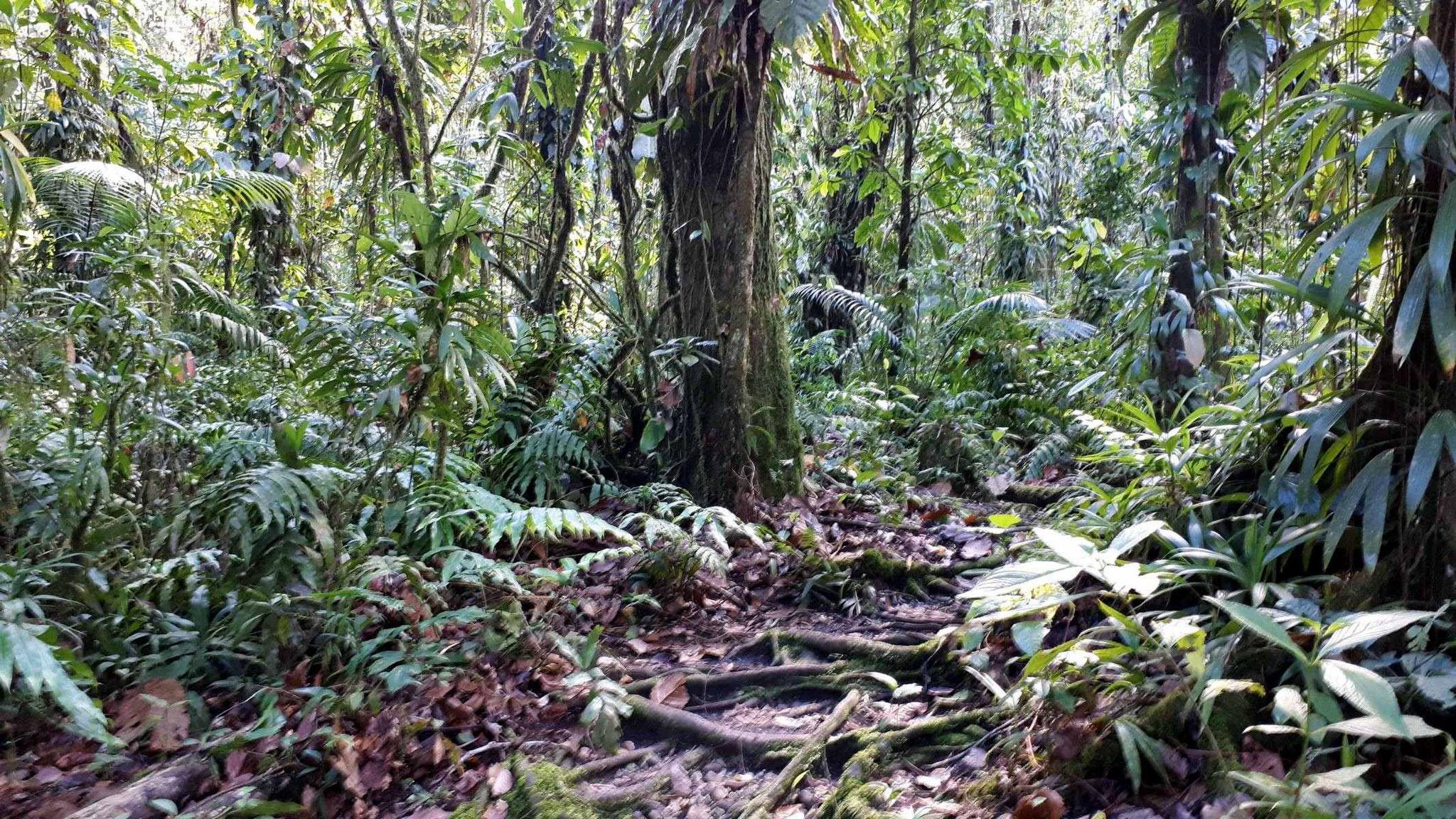 Regenwald  Maison de la Forêt