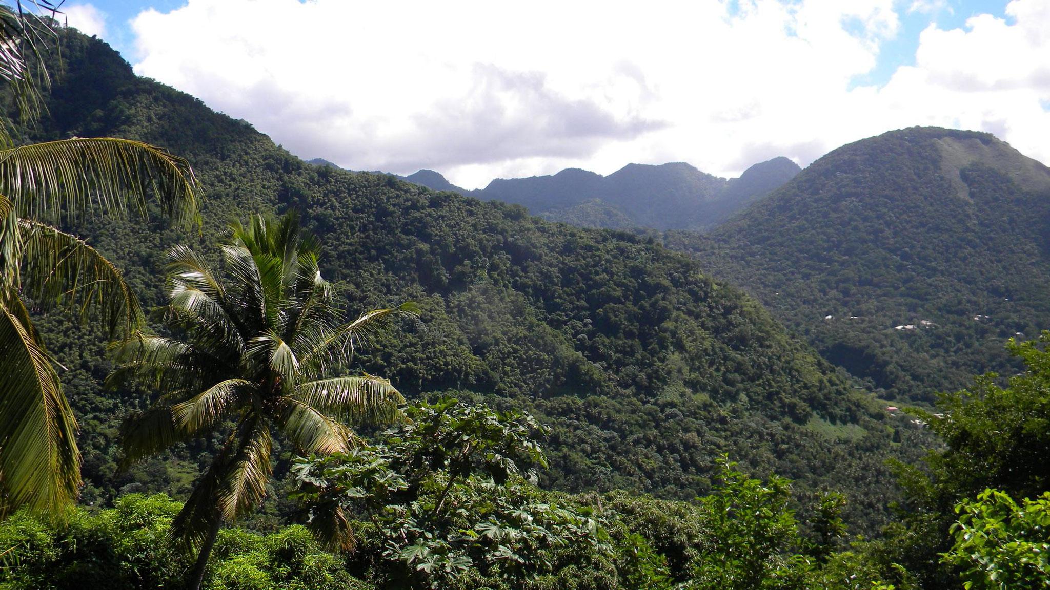 Regenwald bei Soufriere