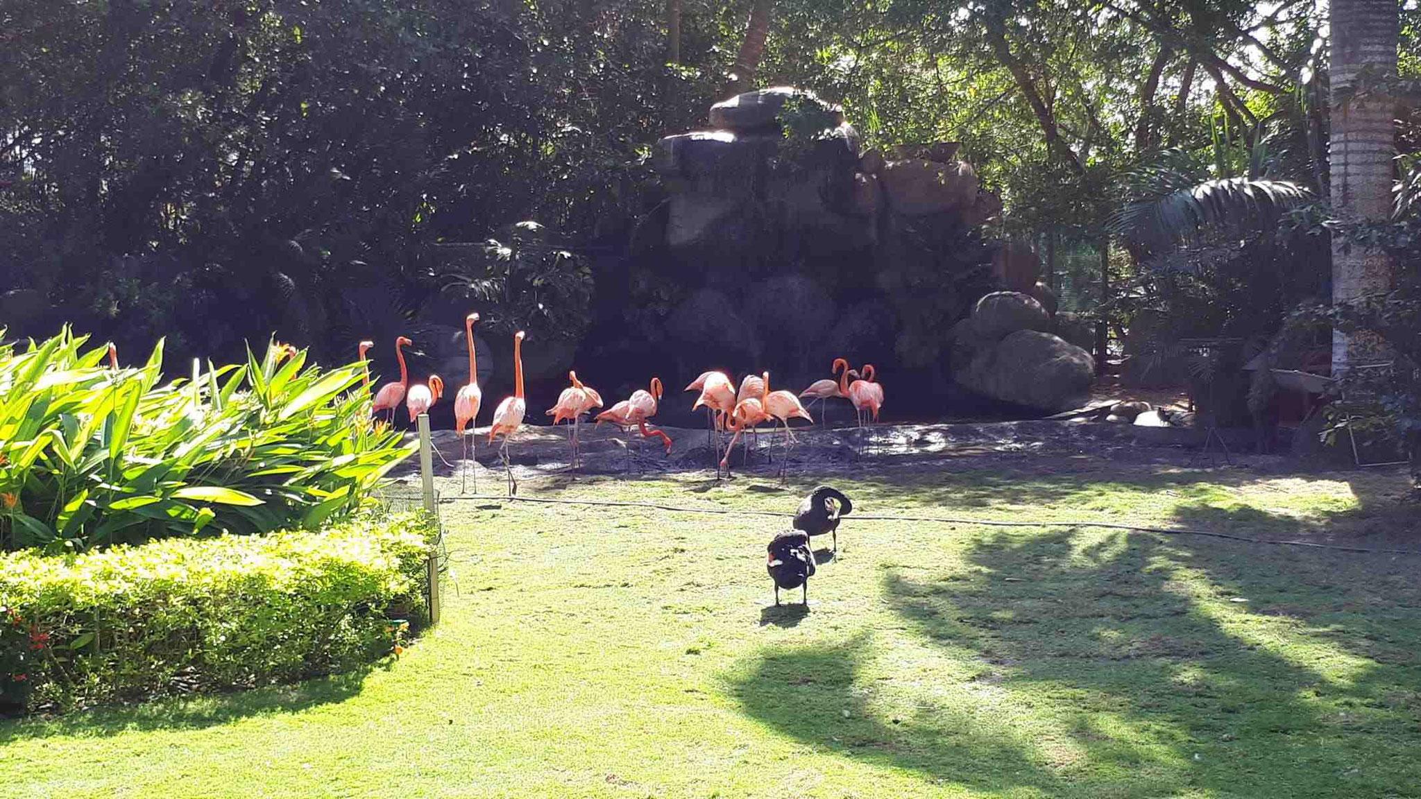 Flamingos auf dem Terminalgelände