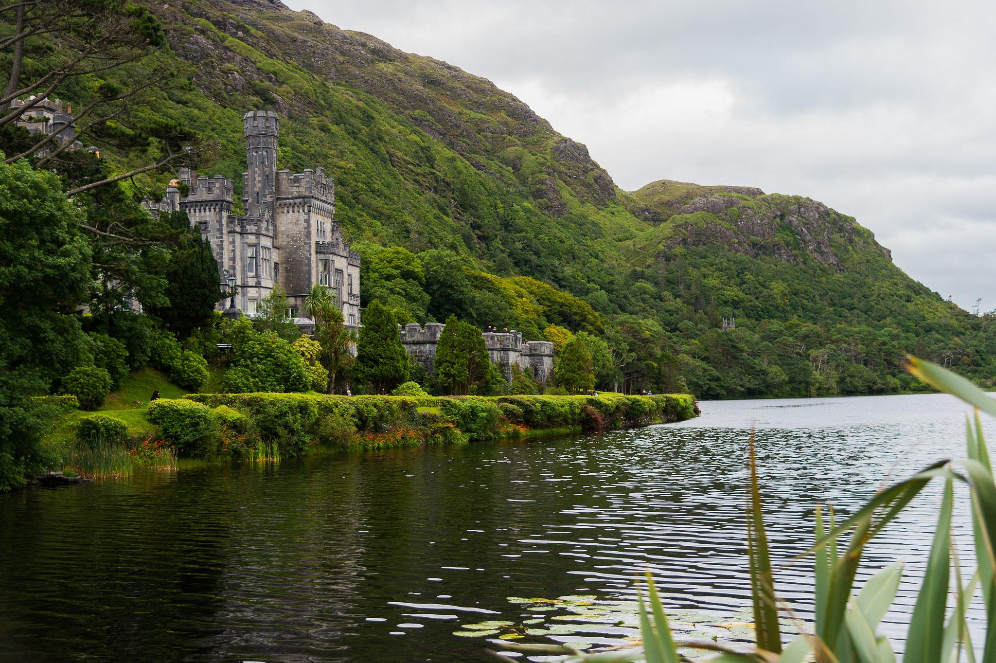 _D4S6838_parc du Connemara Killmore-Irlande