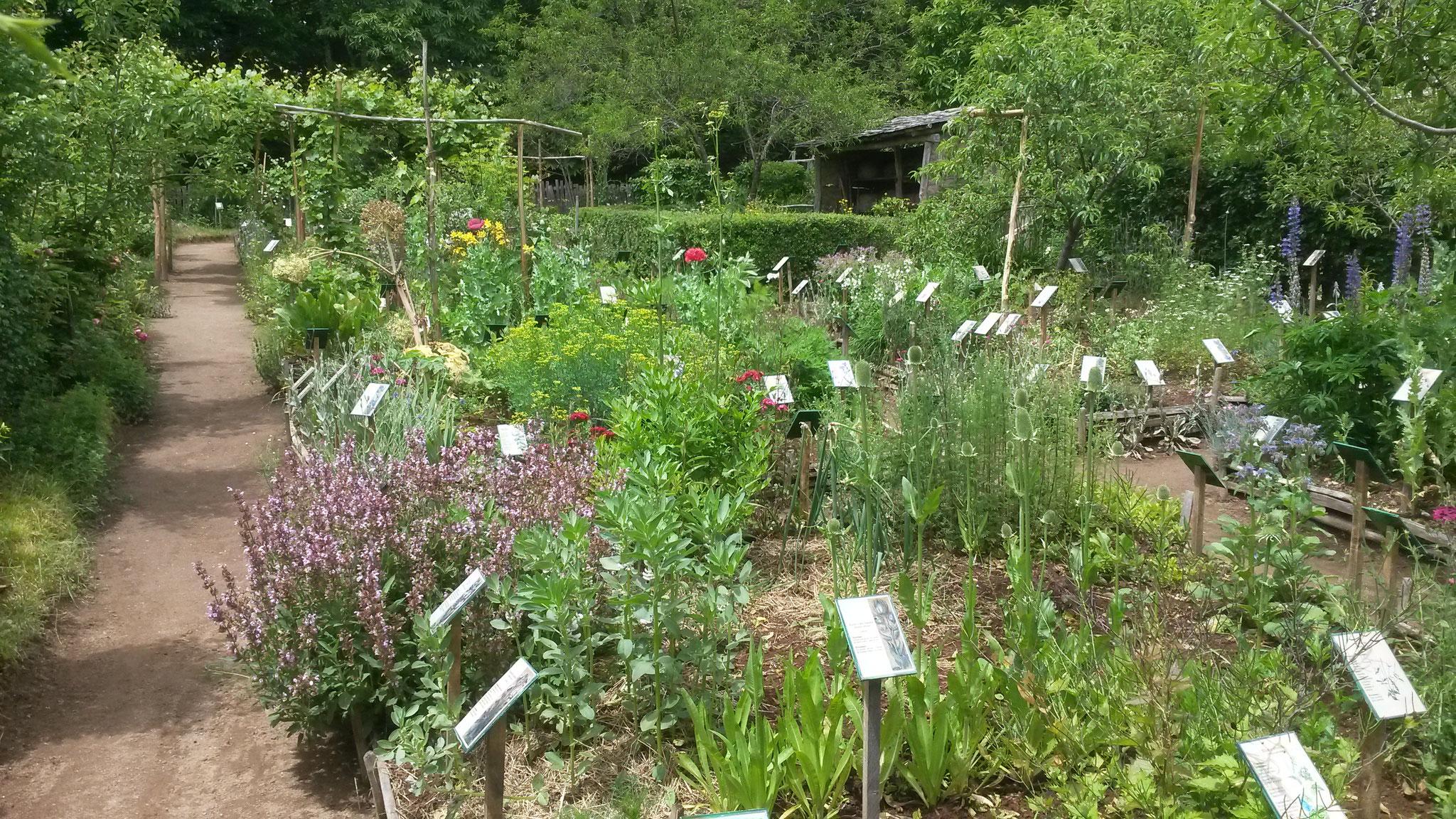 Le jardin m di val v ritable conservatoire botanique for Jardin veritable