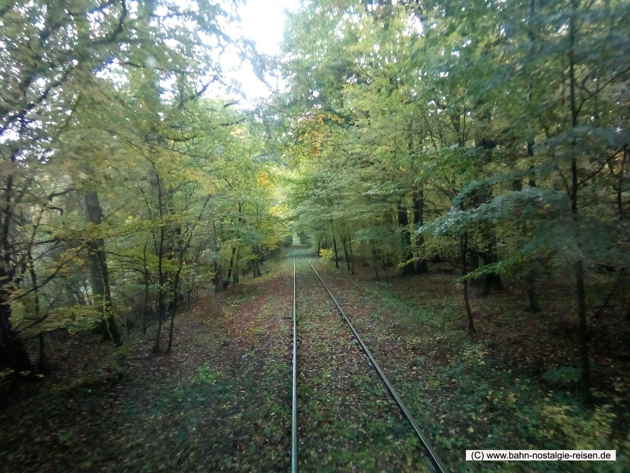 Der goldene Herbst und die Kalibahn