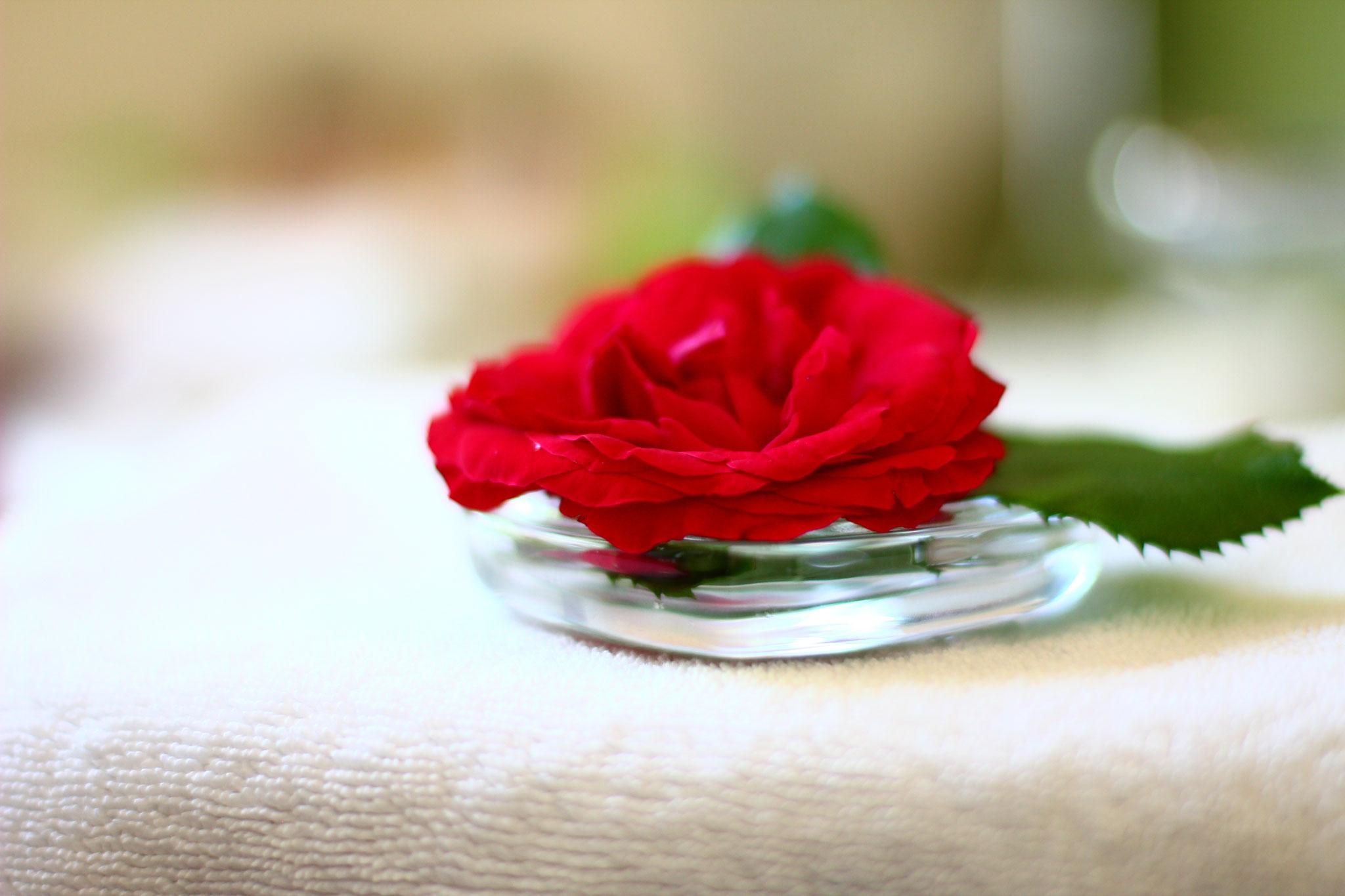 Rose im Badezimmer