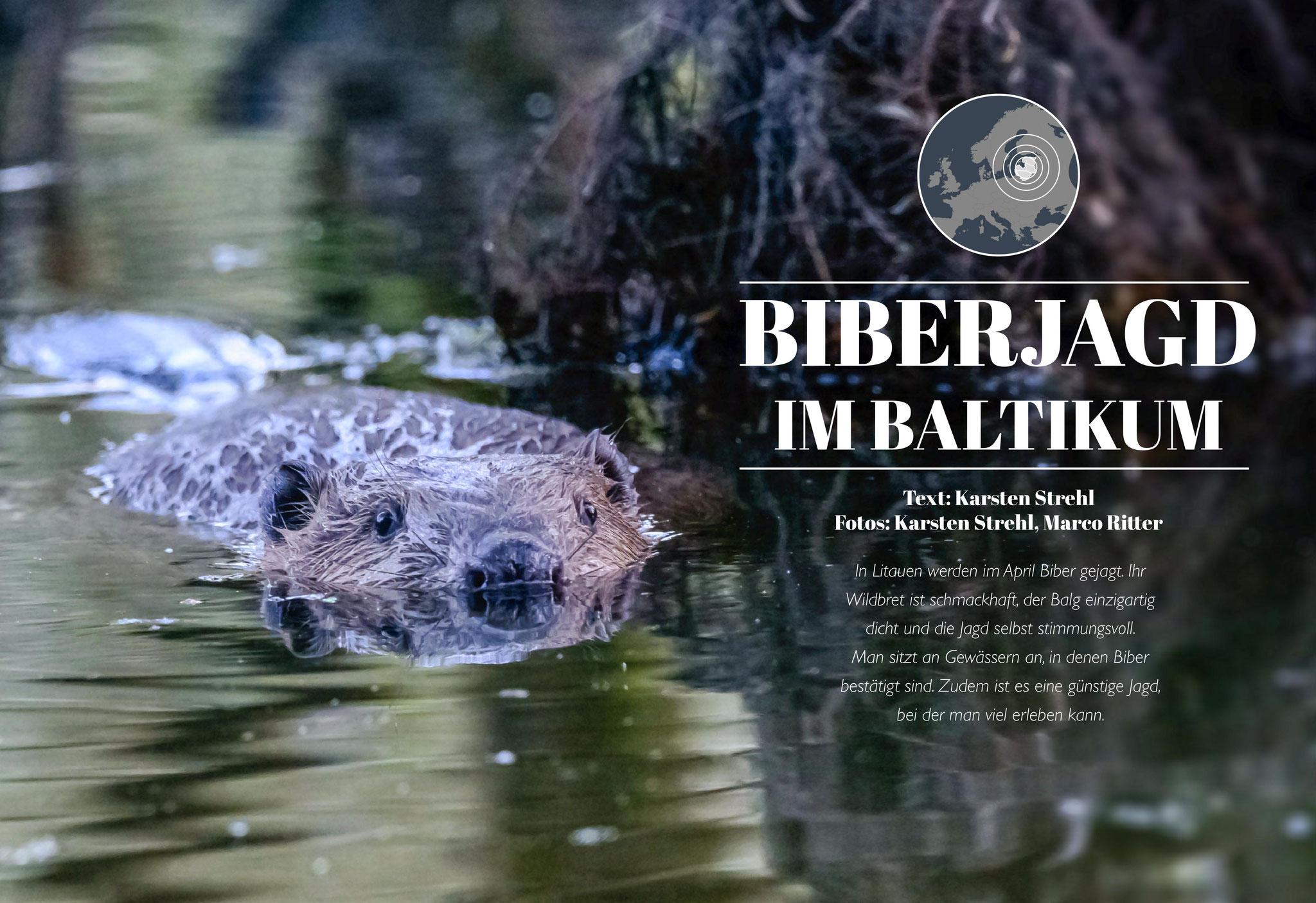"teilweise Bebilderung inkl. Leitbild des Artikels ""Biberjagd im Baltikum"" in Jagdzeit International Nr. 34 (01/2018)"